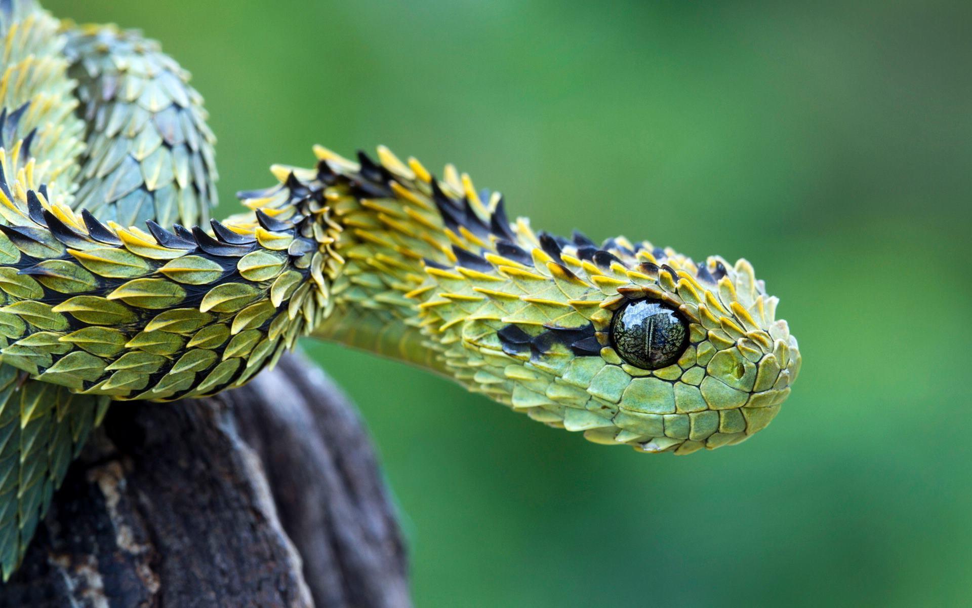 Beautiful snake photo