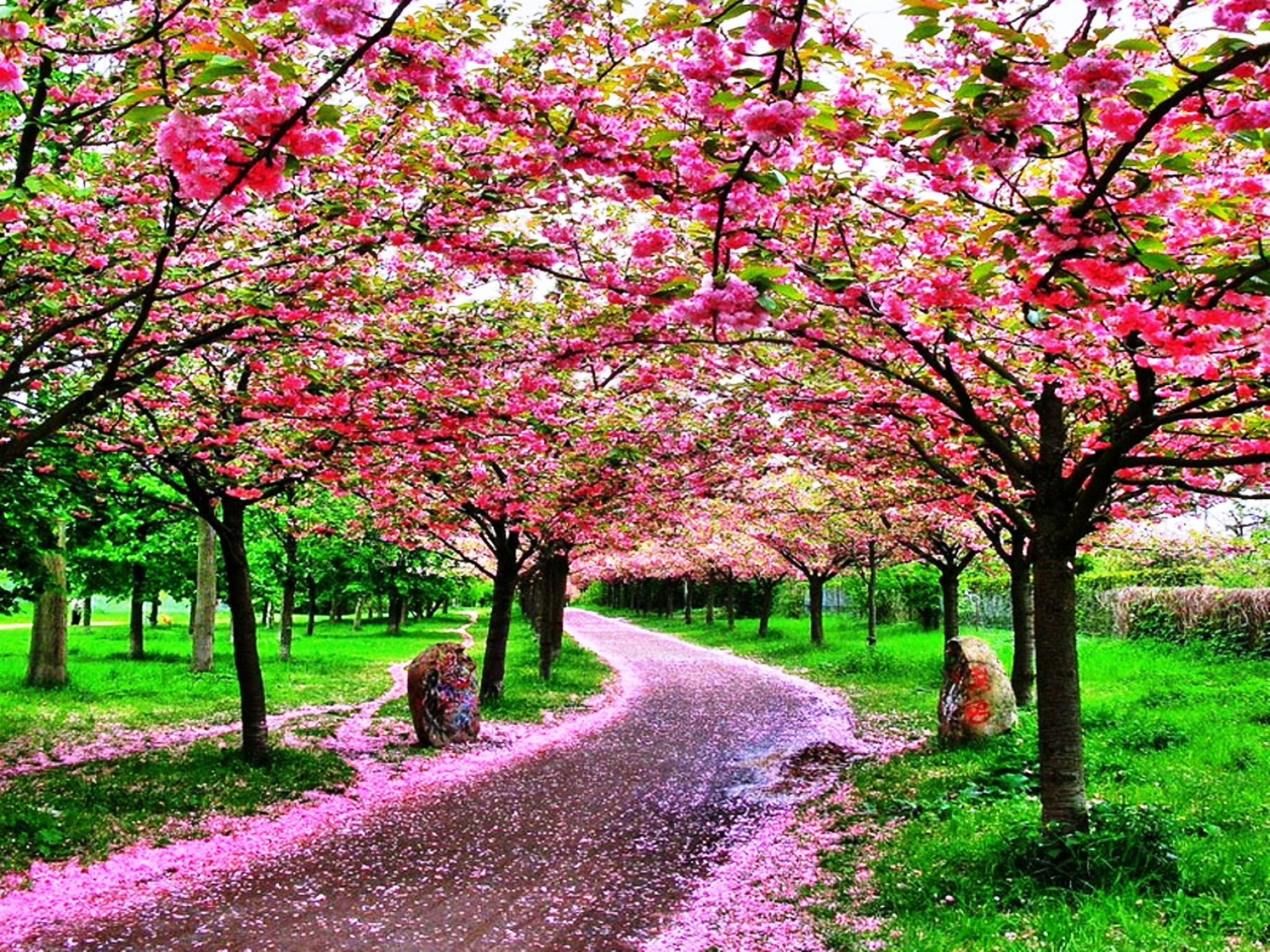 Beautiful Trees And Flowers Garden Inspiration