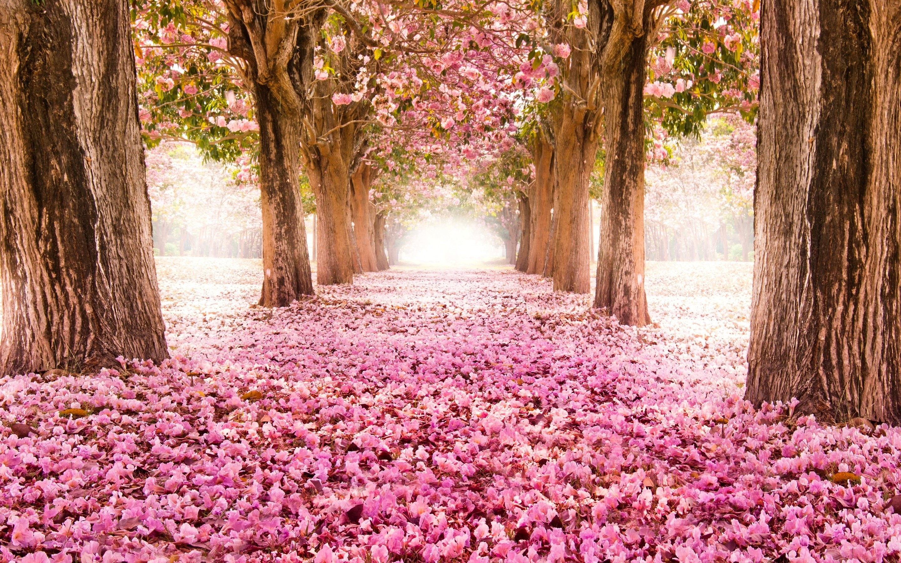 Trees: Tree Landscape Flower Spring Nature Great Beautiful Full Hd ...