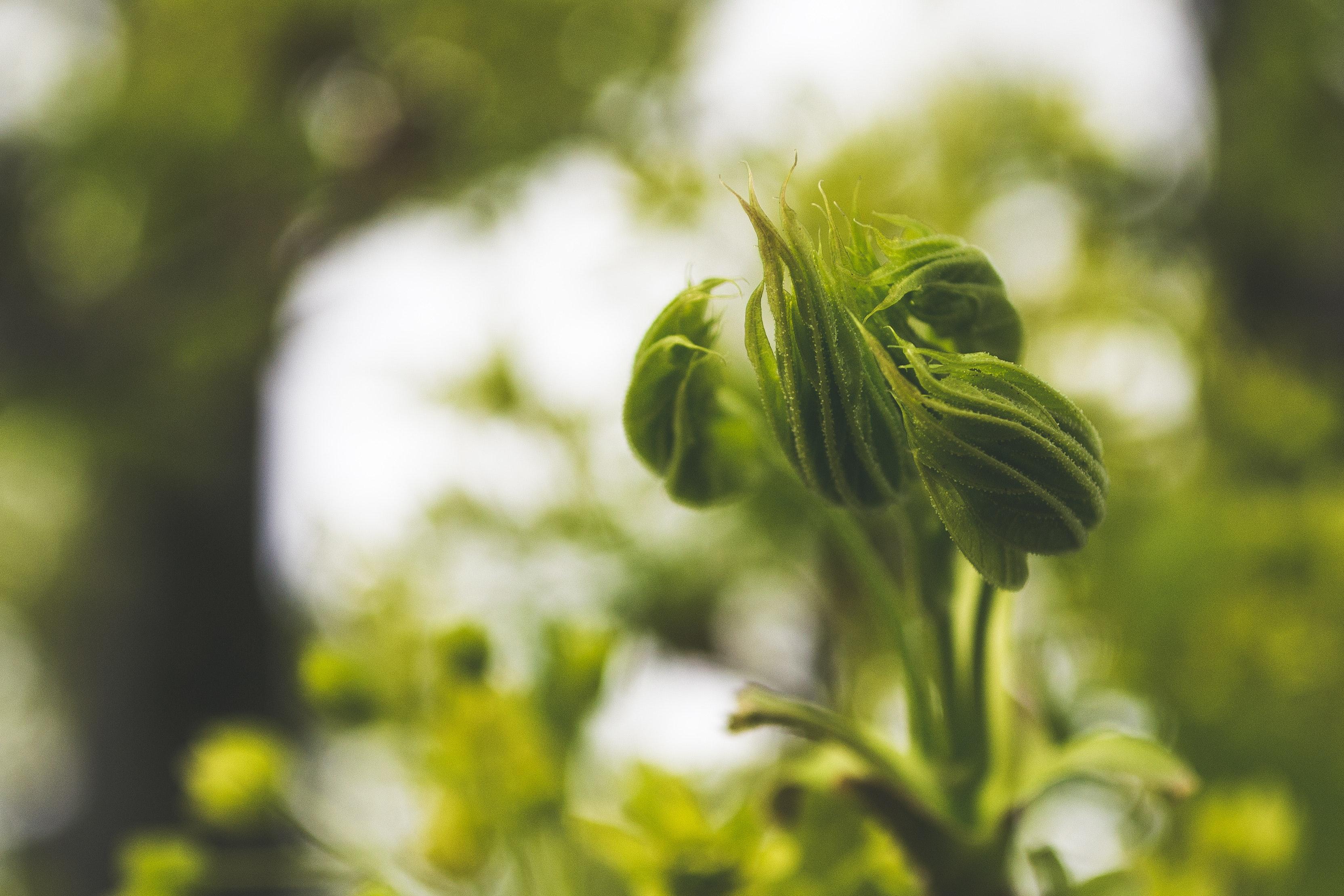 Beautiful unusual green plant, Beautiful unusual green plant