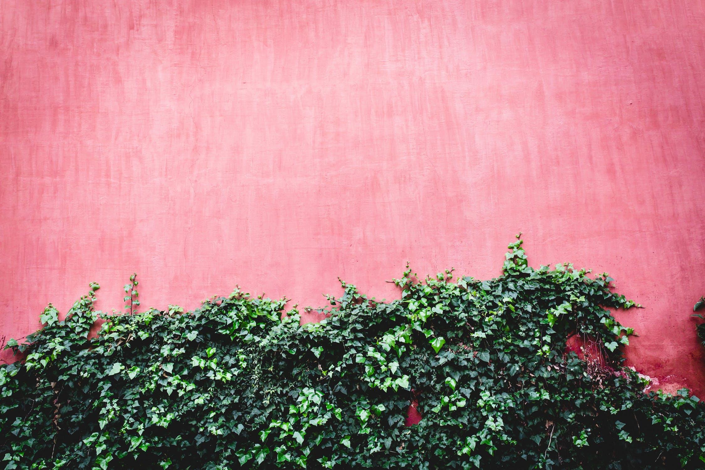 beautiful wall