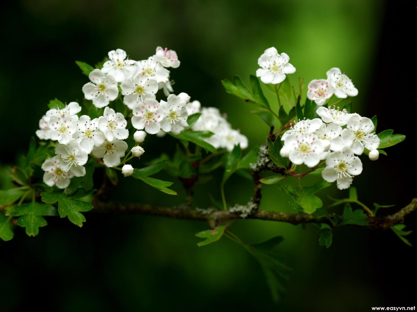 White flower photo