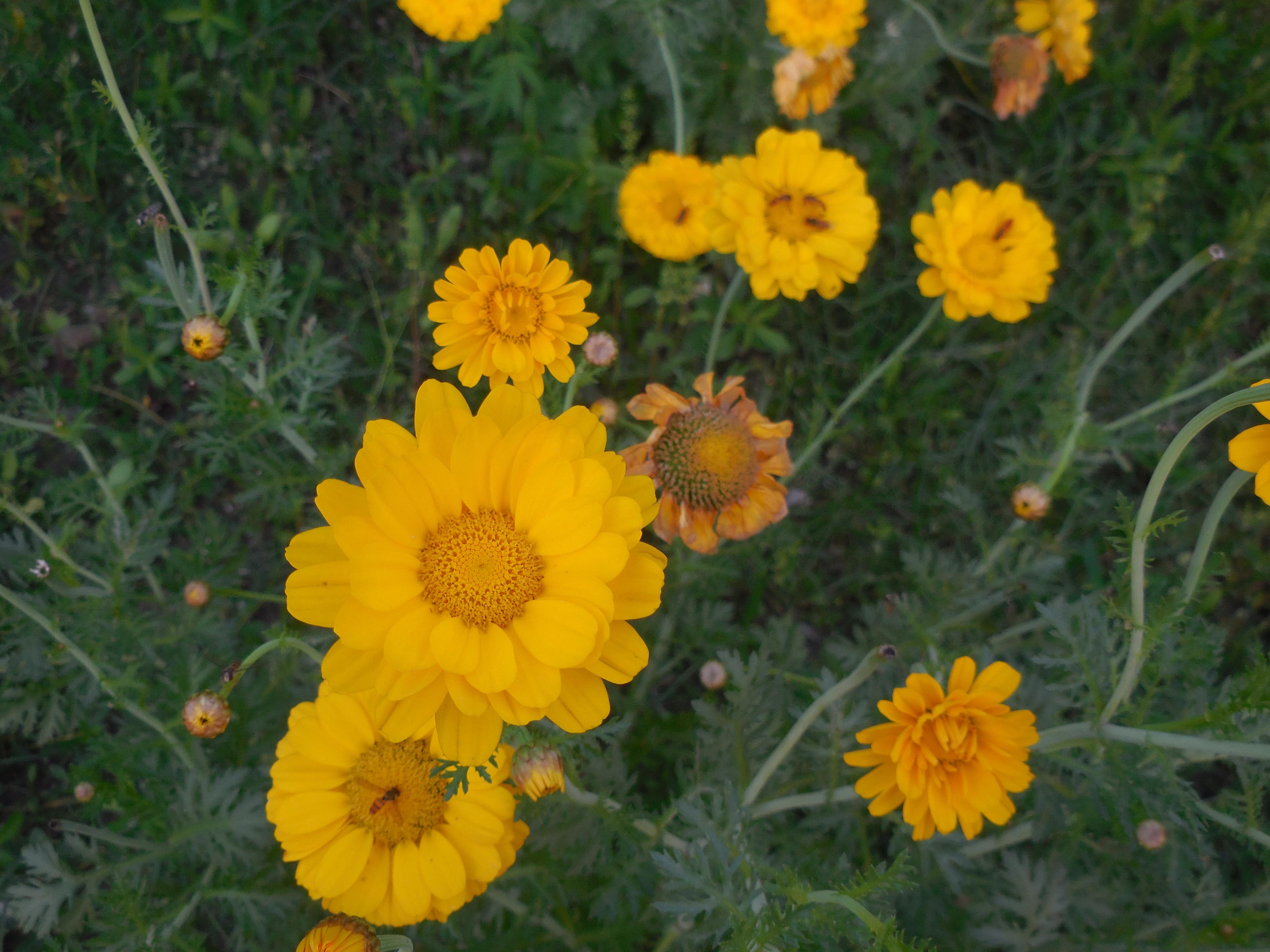 Free Photo Beautiful Wildflowers Spiritual Rose River Free