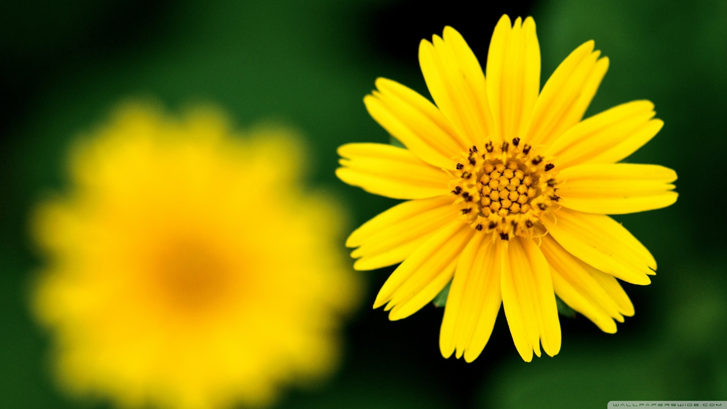 Yellow beautiful flower photo