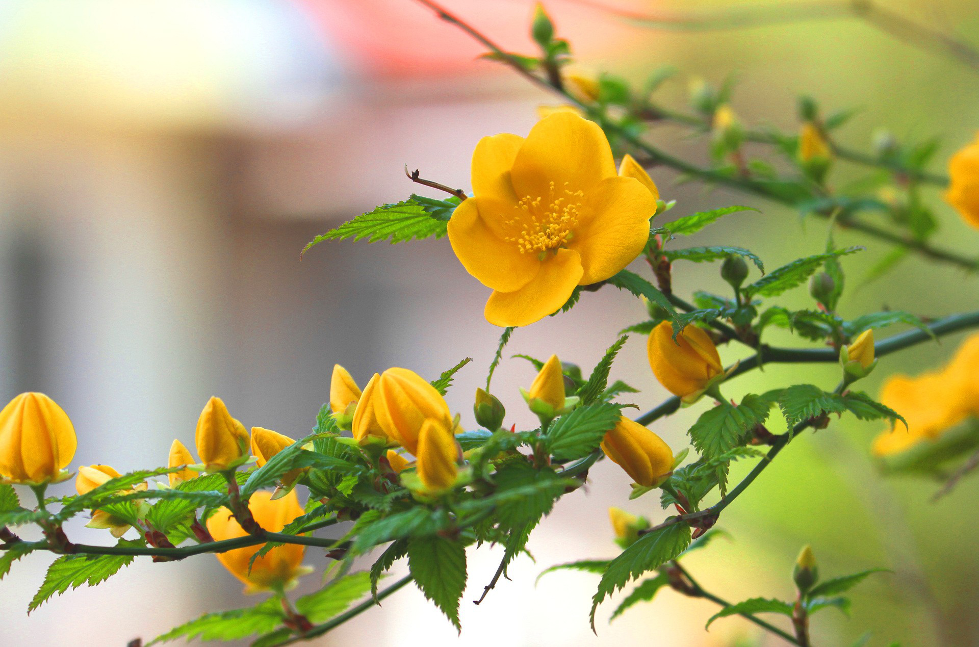Free photo beautiful yellow flower yellow gardening beautiful beautiful yellow flower izmirmasajfo