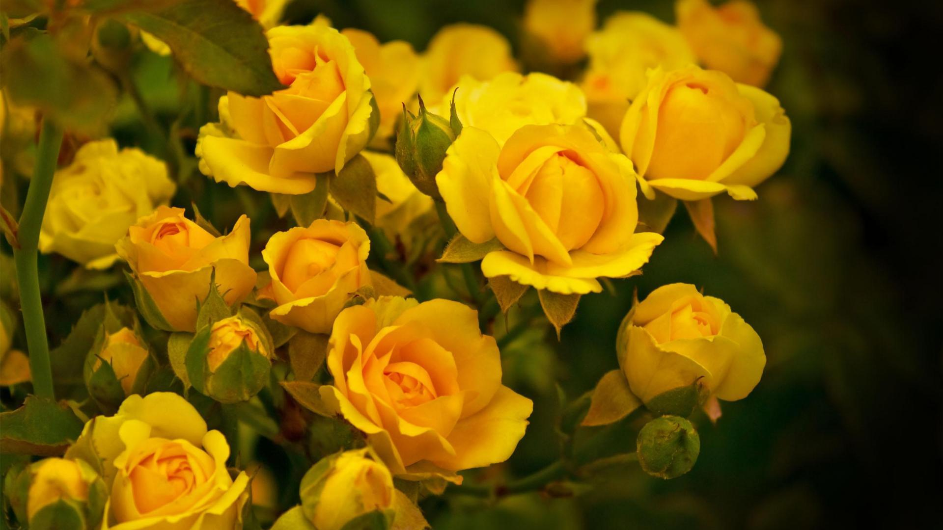 Free photo beautiful yellow flower yellow flower beautiful beautiful yellow flower izmirmasajfo