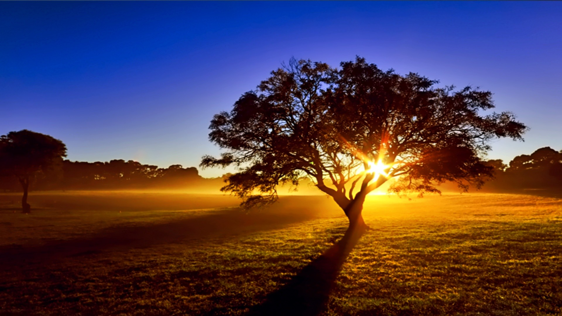 Sunset: Beauty Land Blue Nice Ray Trees Sunset Wallpaper For Ipad ...
