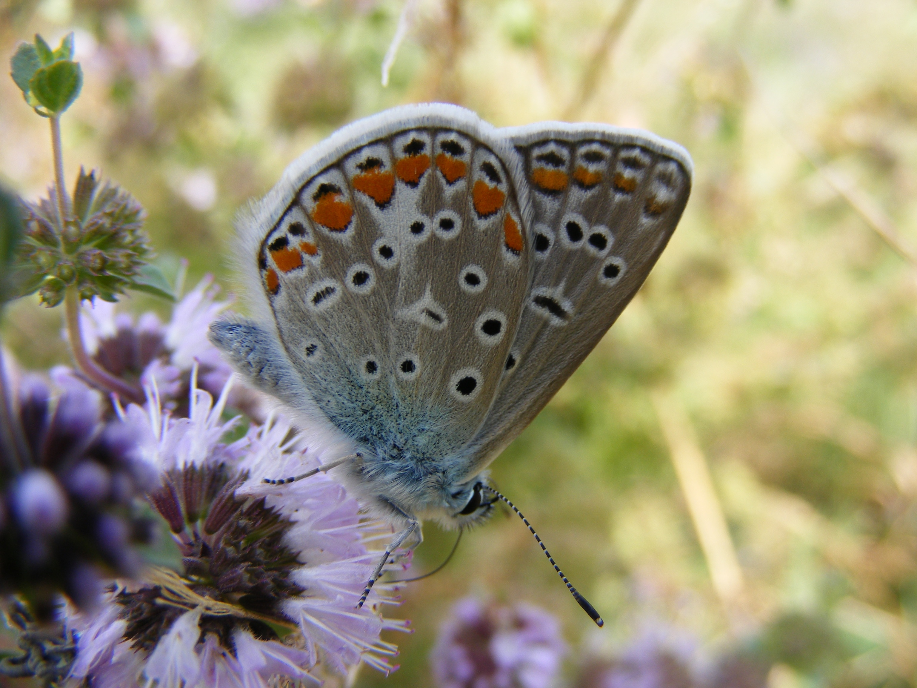 Beauty of Nature, Animal, Butterfly, Fly, Insect, HQ Photo