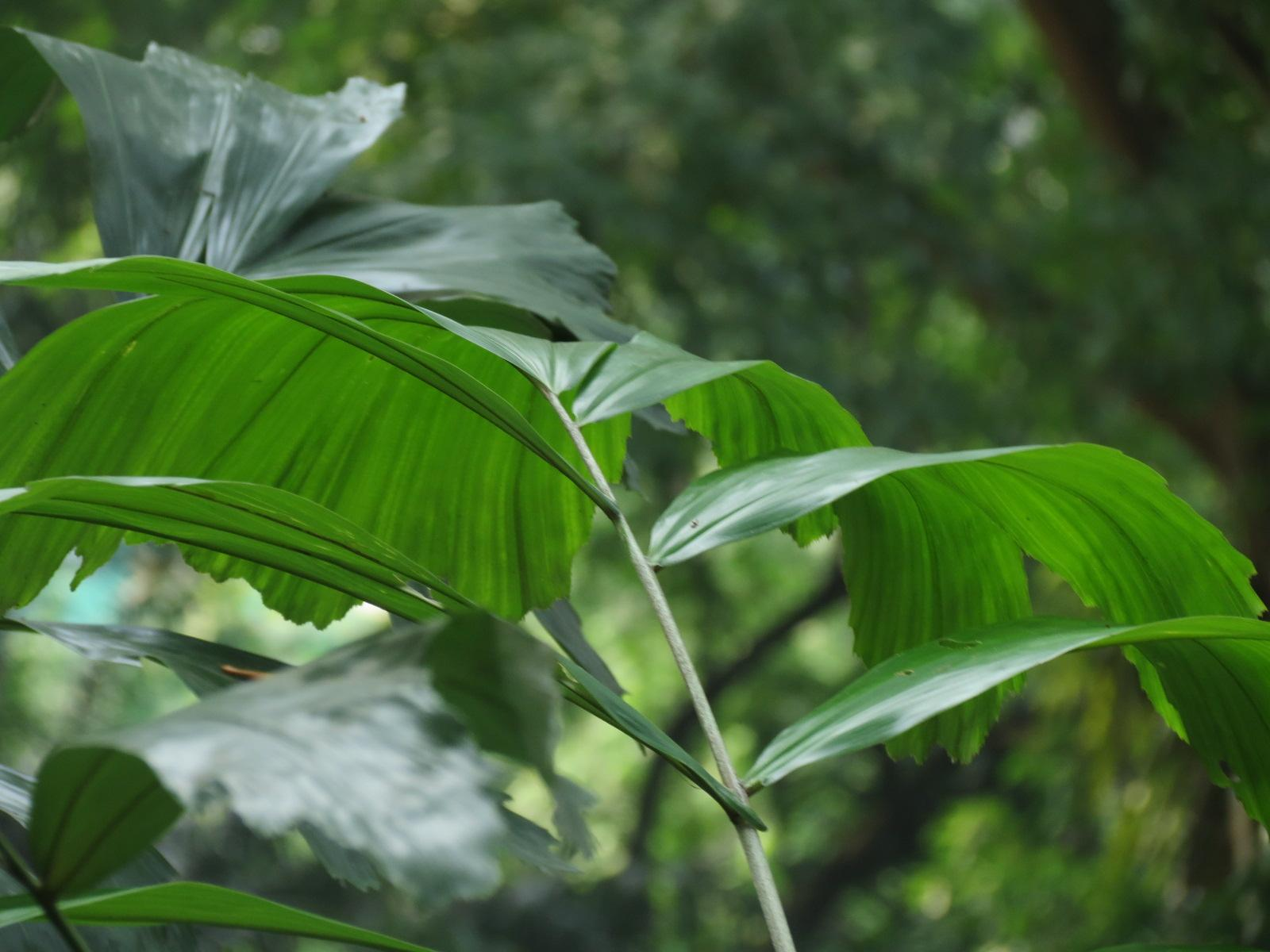 Beauty of nature, Green, Leaf, Leaves, Plant, HQ Photo