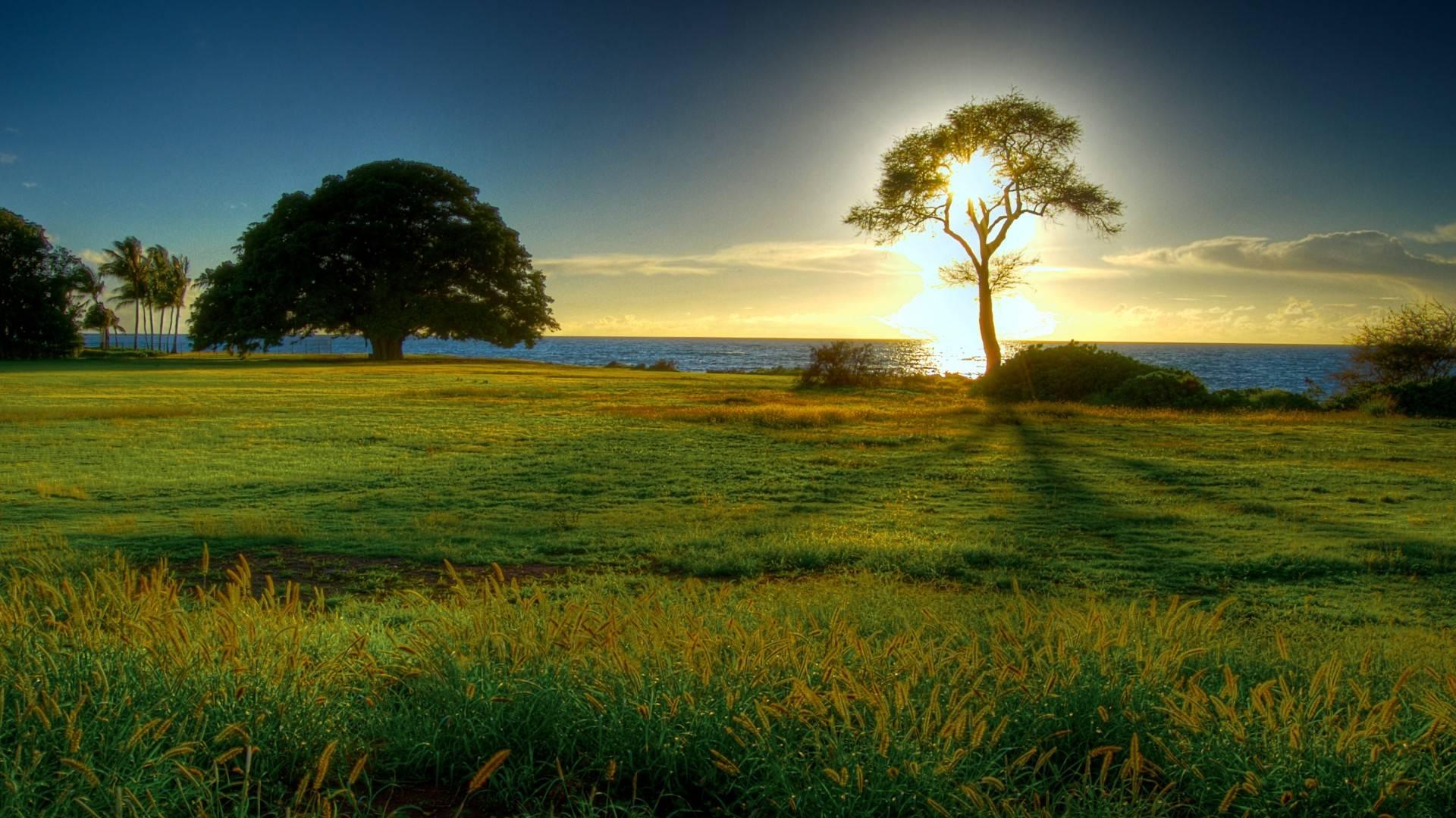 Natural beauty photo