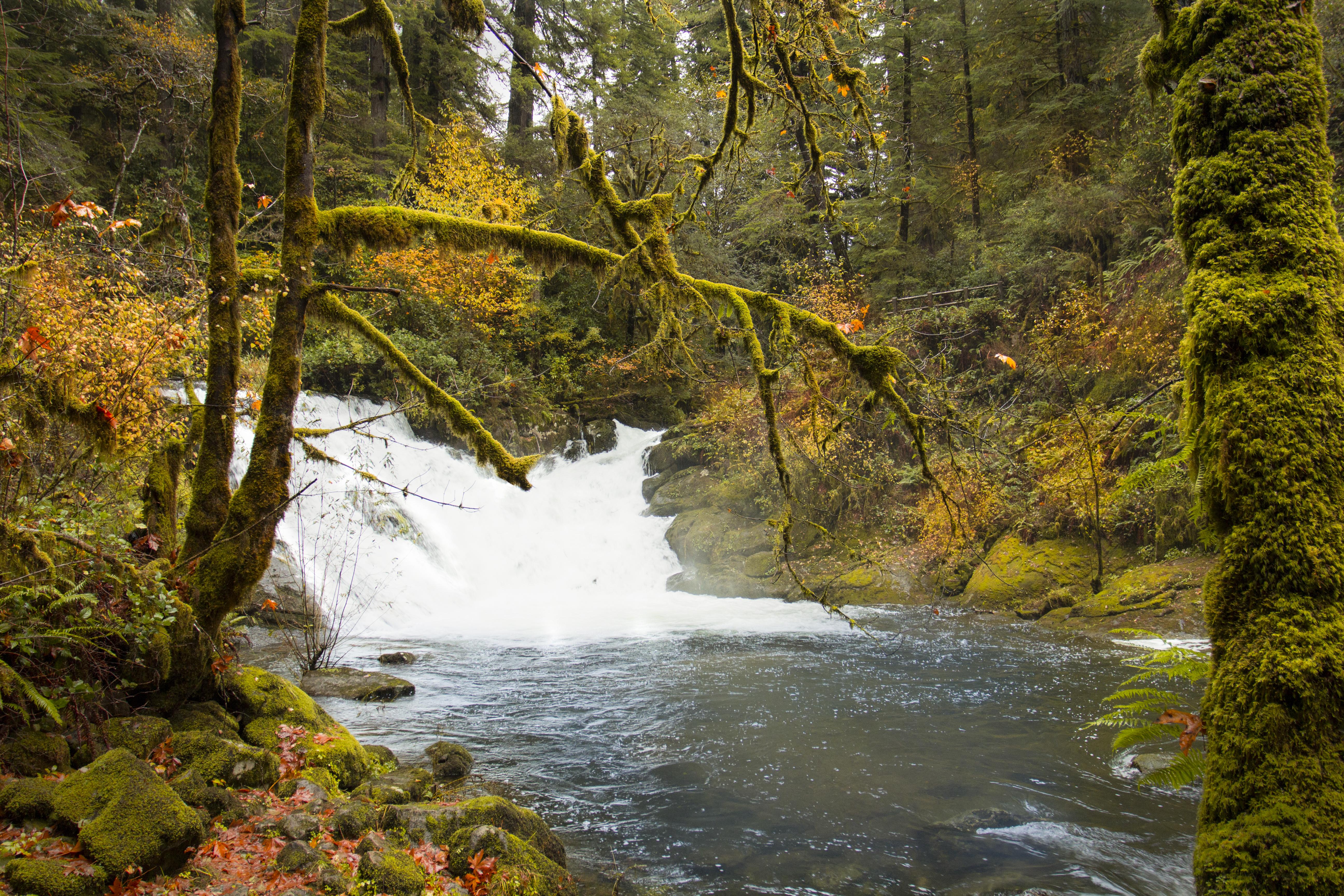 Beaver Creek Falls Waterfalls, Oregon, Autumn, Beaver, Creek, Fall, HQ Photo