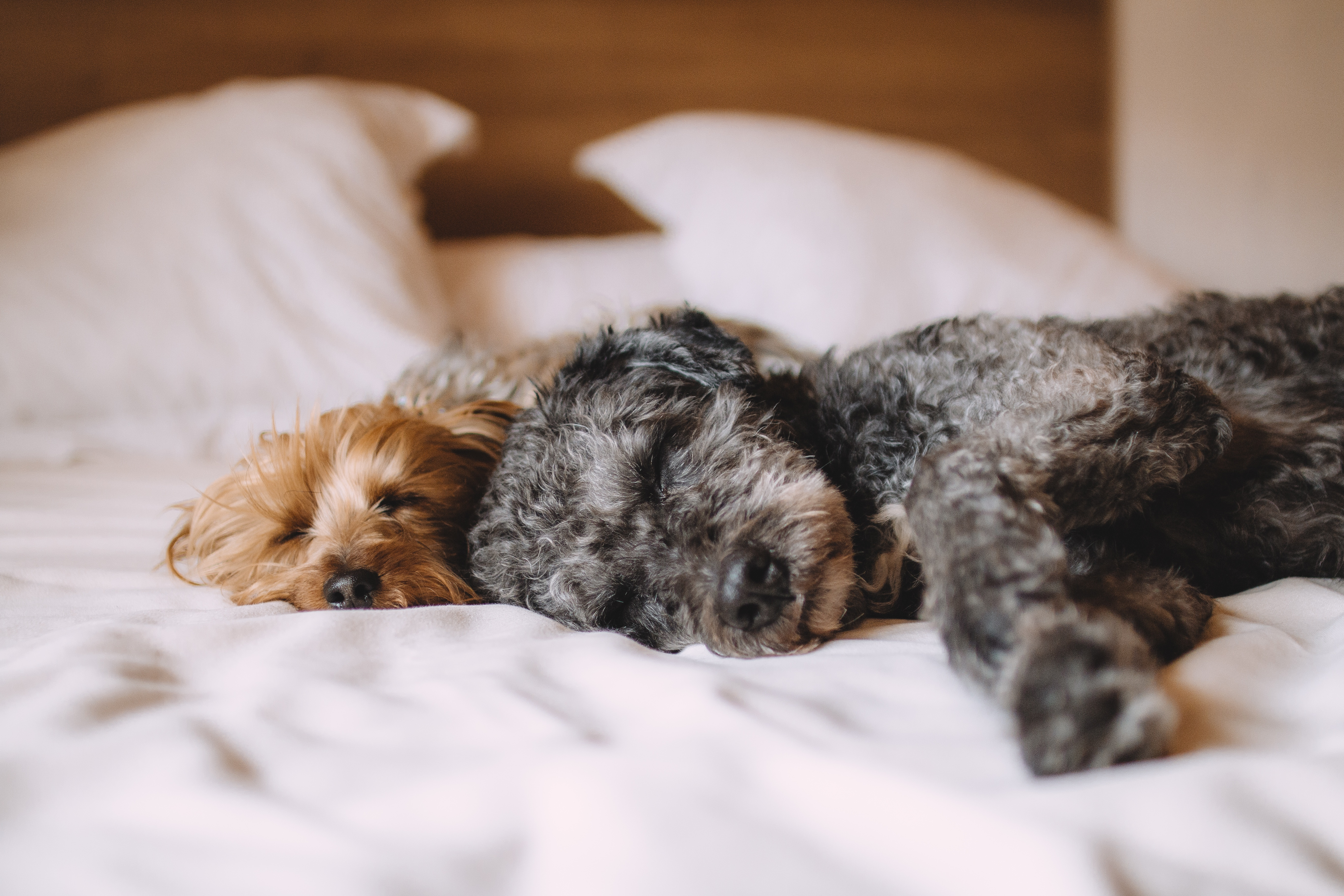 Bed, stock photos free animals