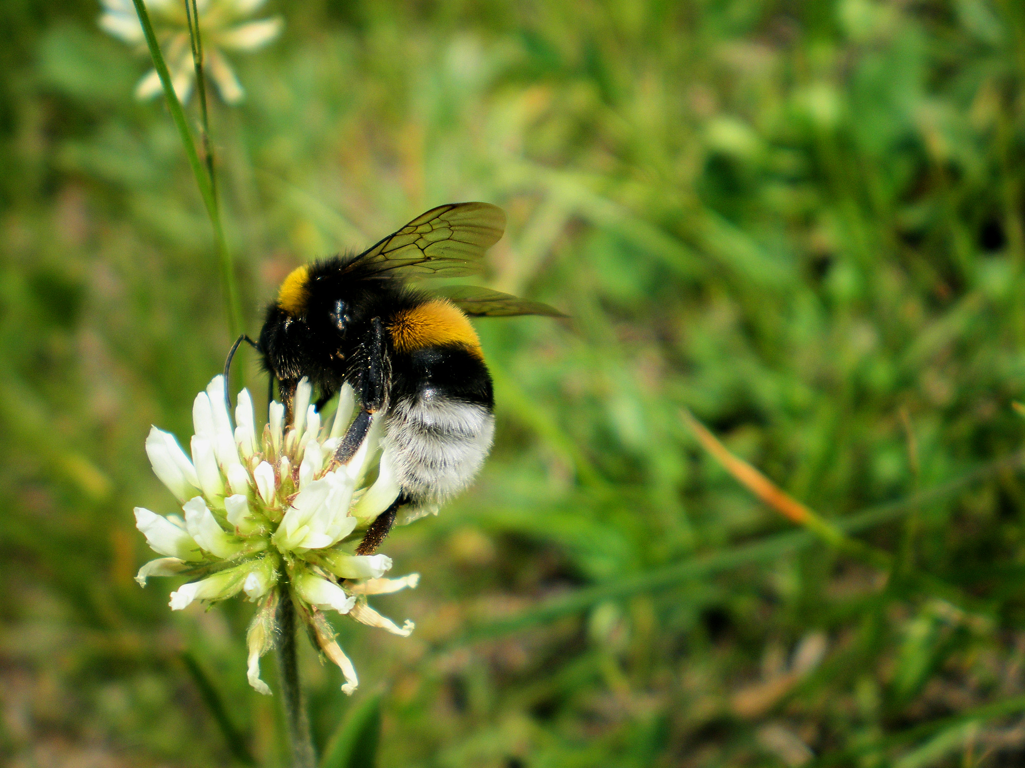 Bee, Animal, Flowers, Fly, Insect, HQ Photo