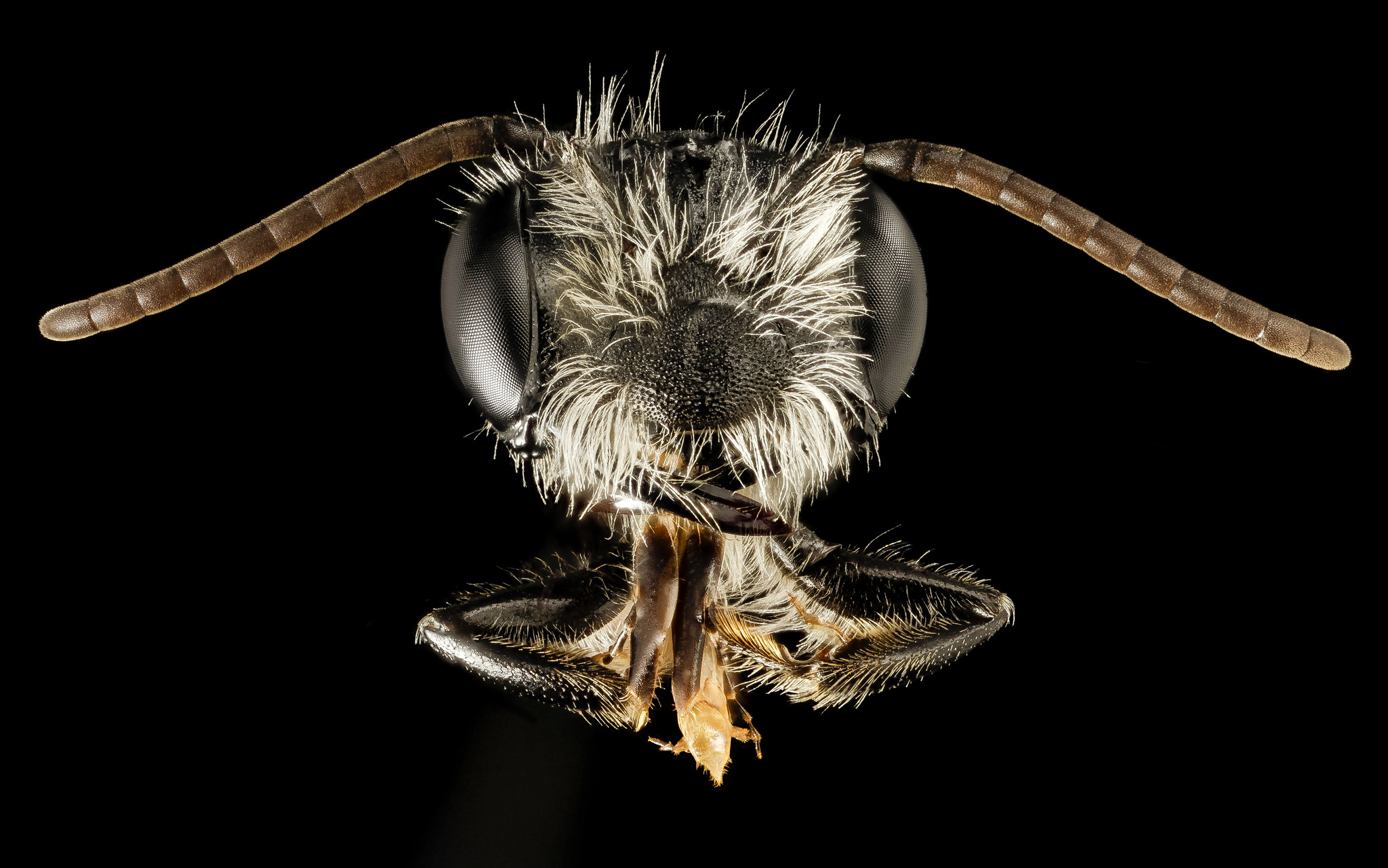 7 Close-Up Pictures Reveal the Beauty of Bees