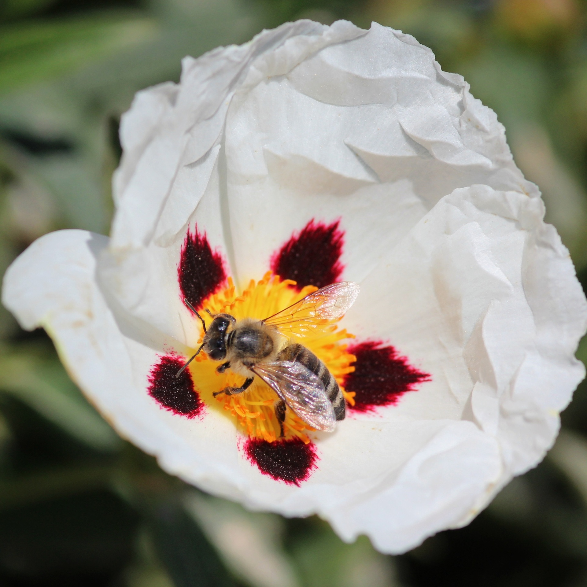 Foap.com: Bee closeup on flower | valia.efstathiou, beautiful ...