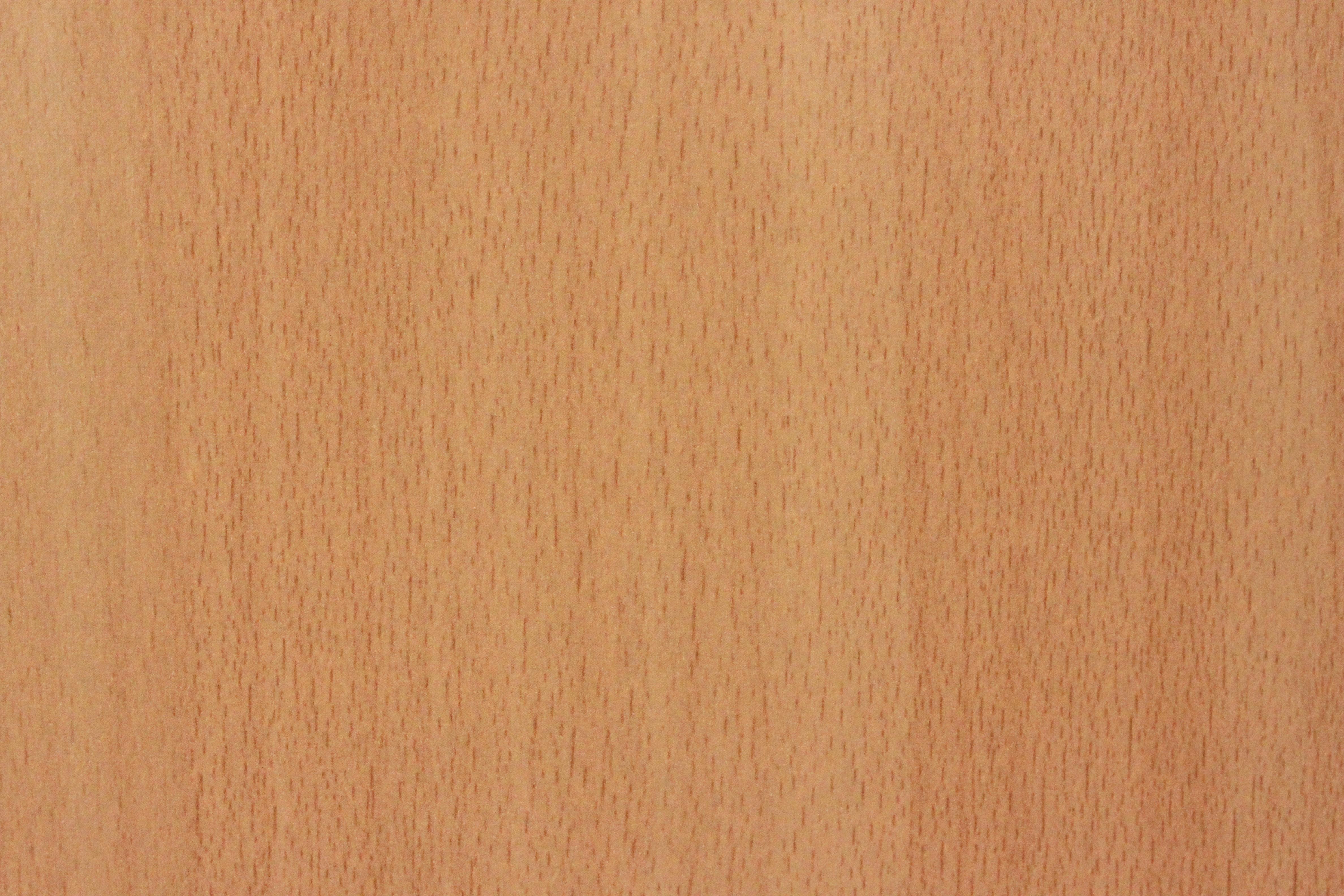 beech wood texture, beech wood texture
