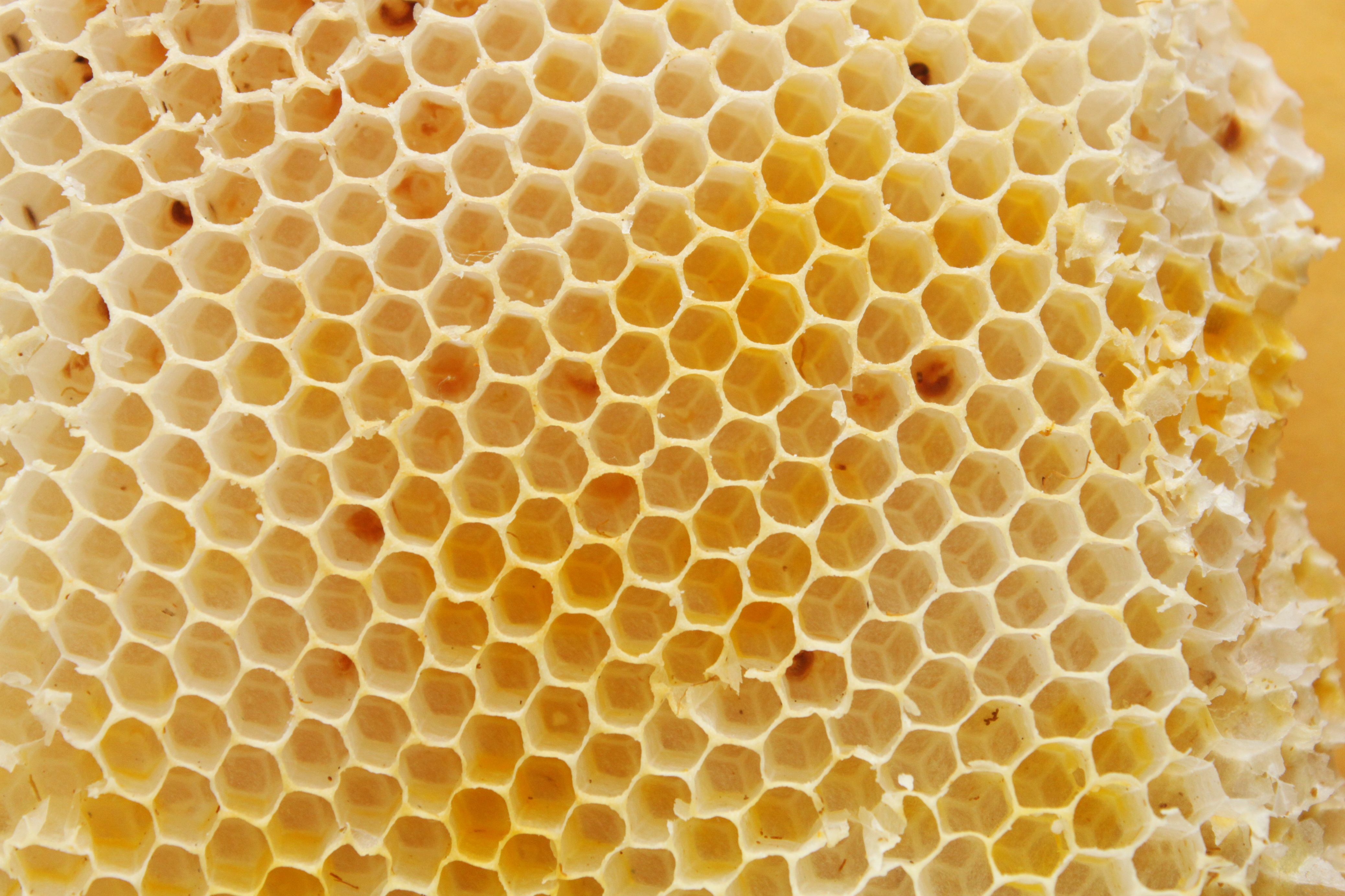 Beehive texture, Abstract, Sugar, Pollen, Polygon, HQ Photo