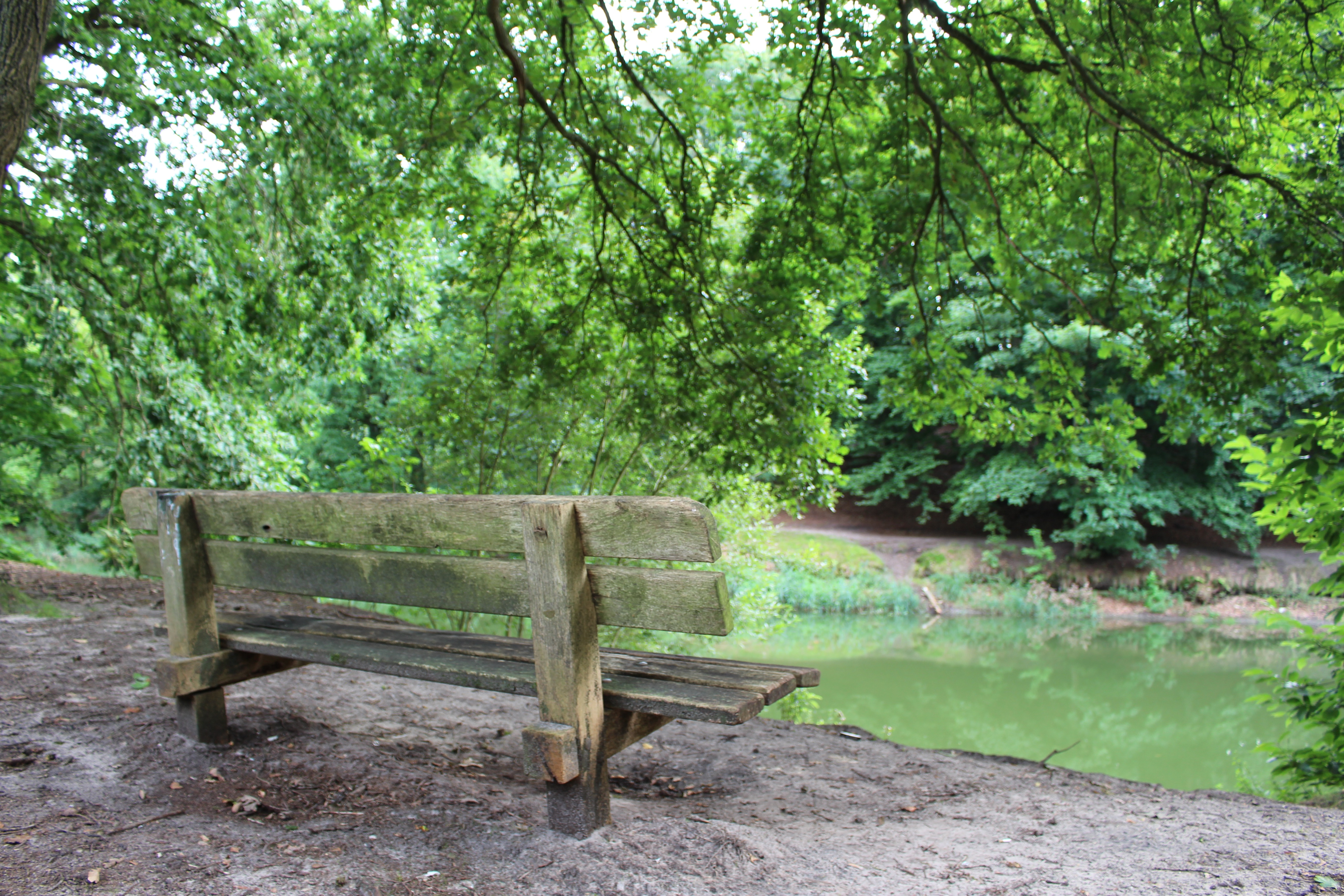 Bench in forest, 700d, Planks, Wood, Water, HQ Photo