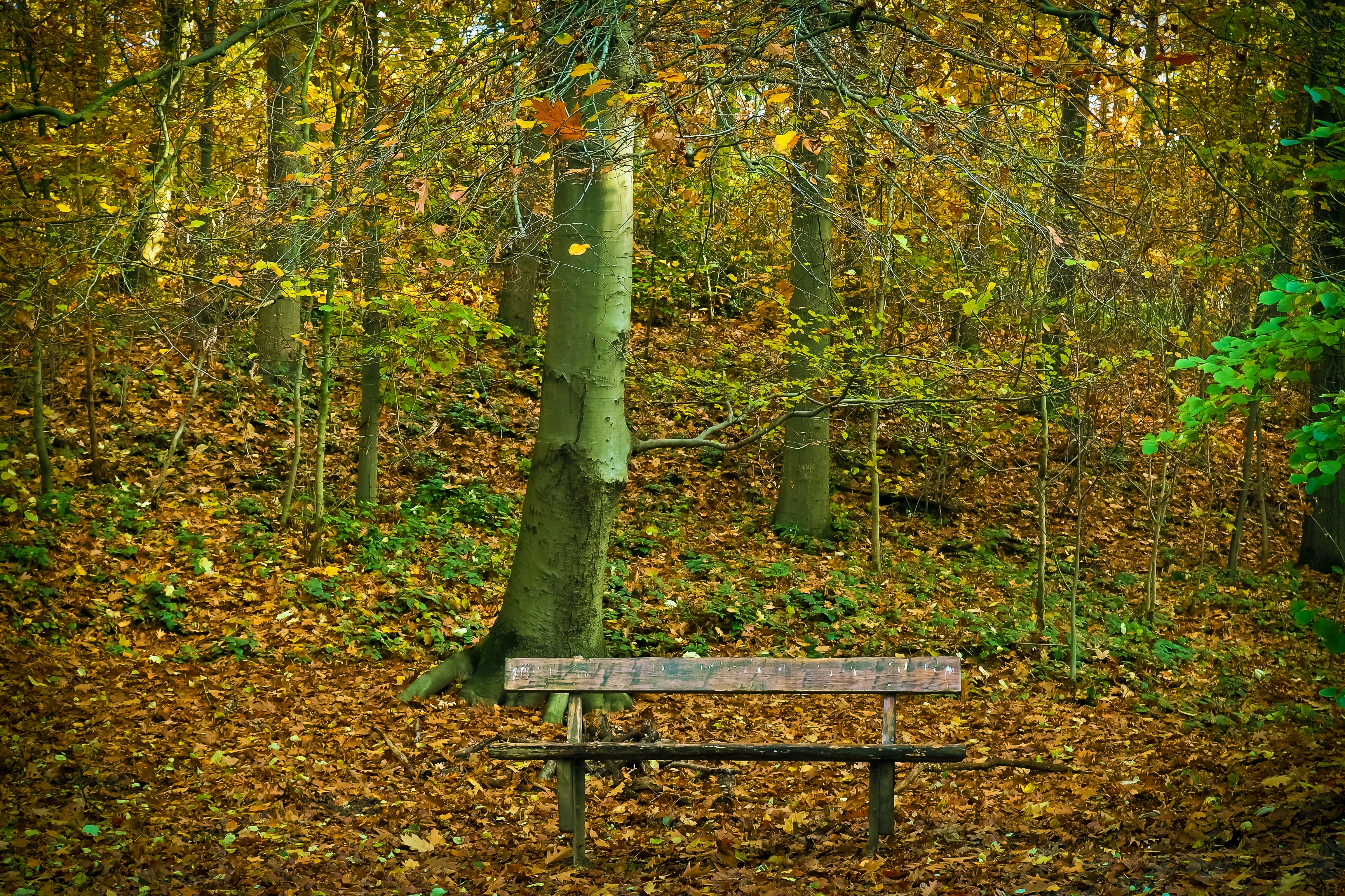 Bench in Park during Autumn, Autumn, Nature, Wooden bench, Trunks, HQ Photo