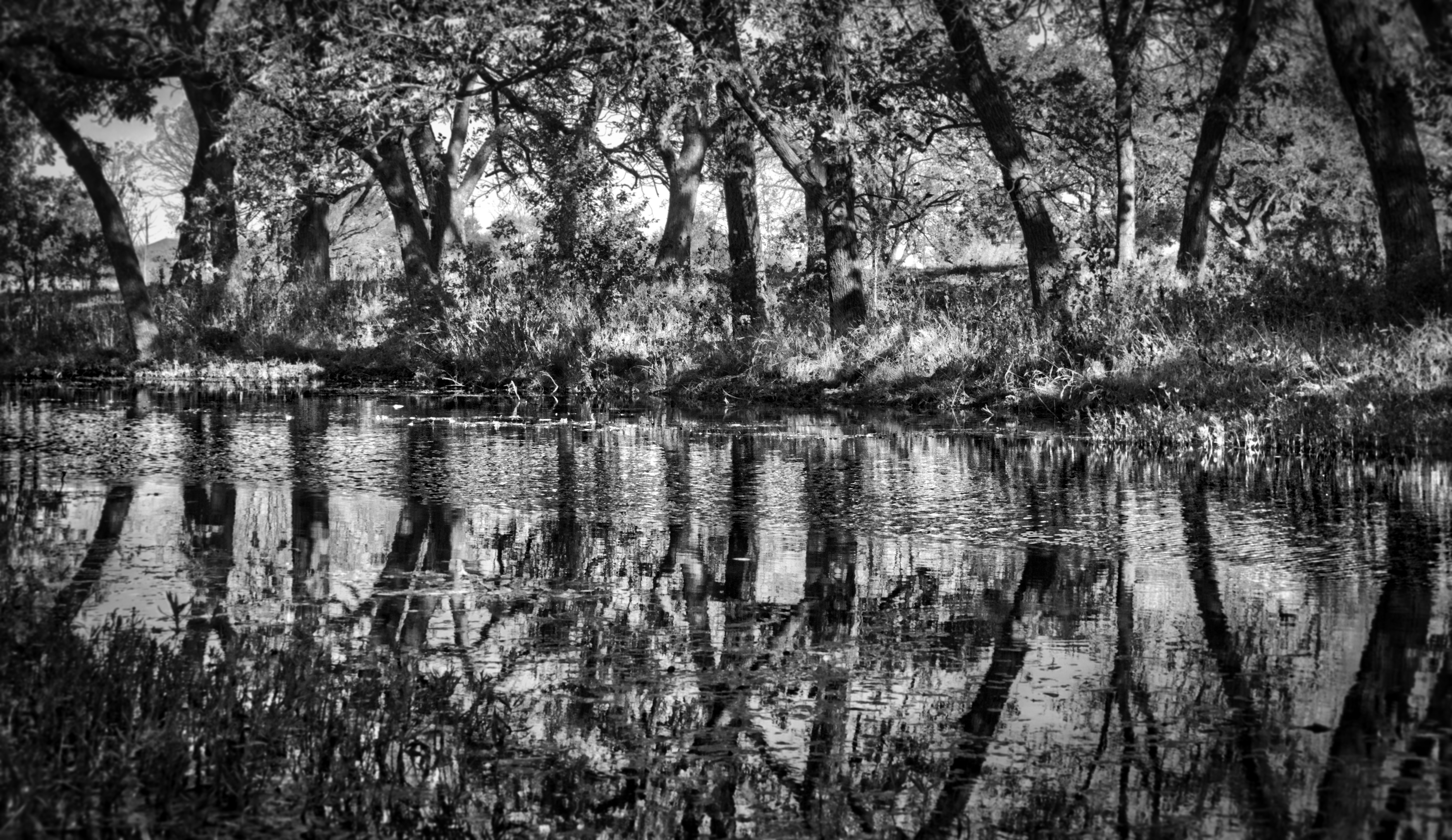 Berry Creek, TX, A7r2, Berry, Black, Creek, HQ Photo