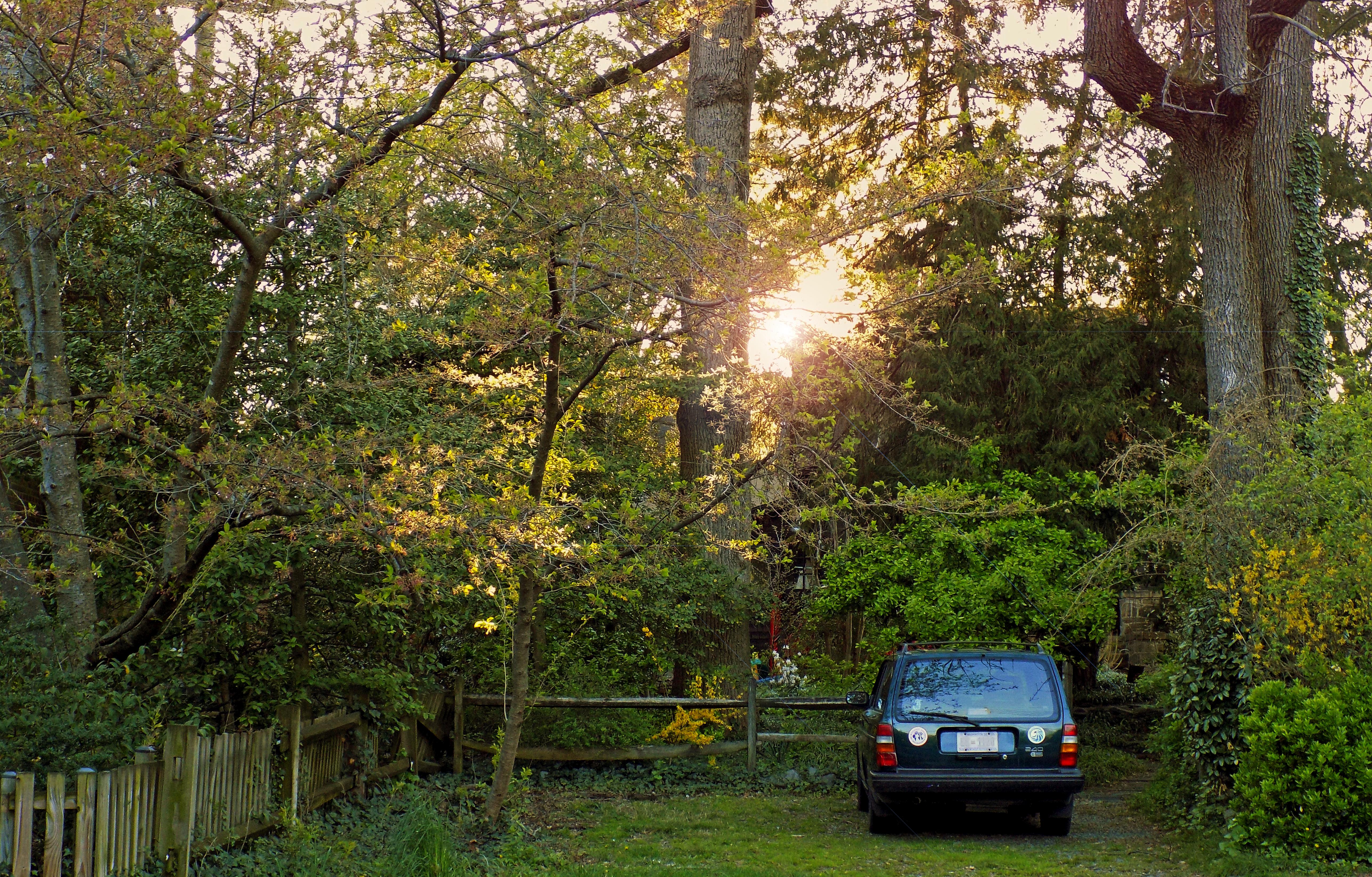 Best Parking Spot, Fence, Nature, Outdoor, Parking, HQ Photo