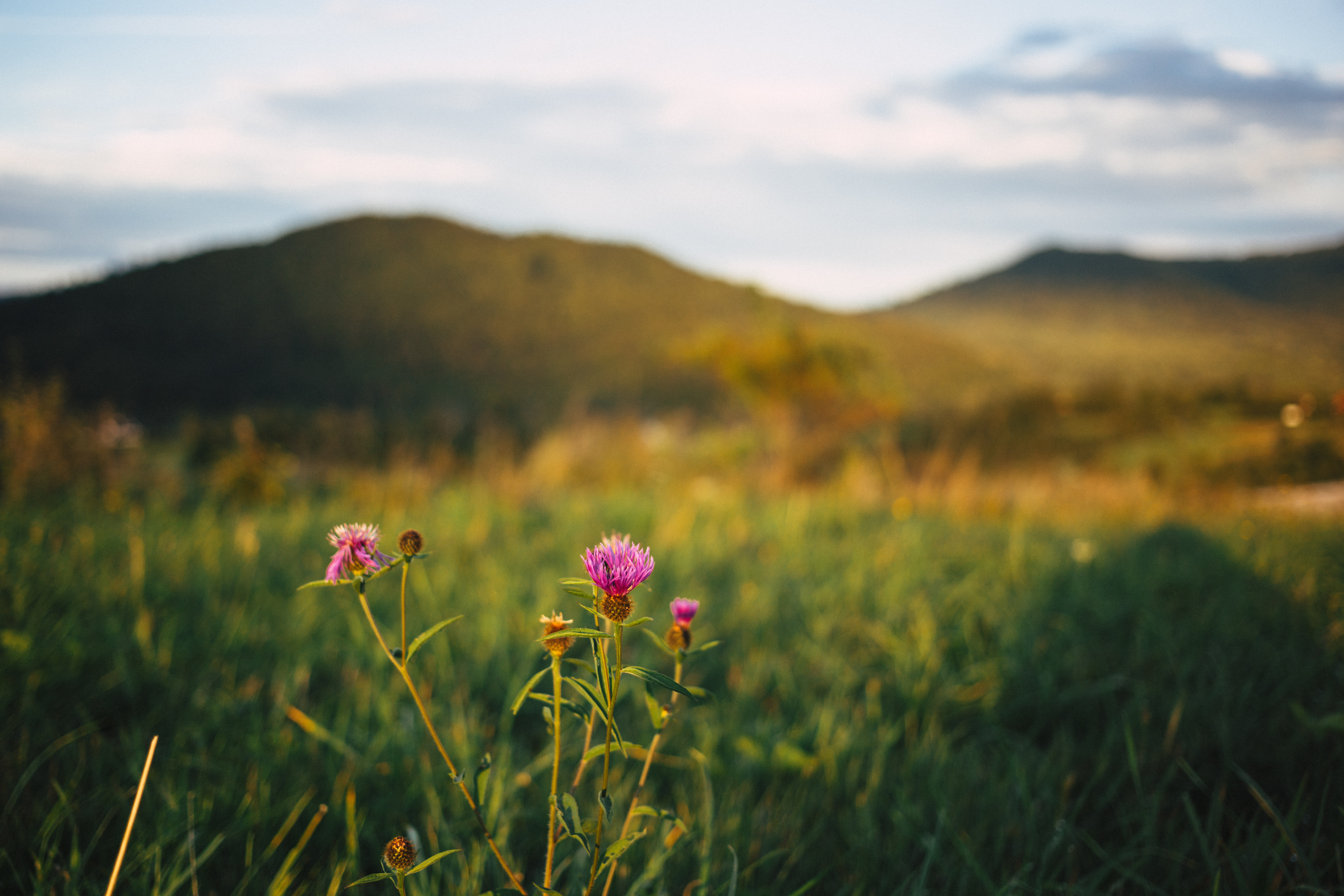 Bieszczady mountains blurred, Poland, Polish, Plant, Pink, HQ Photo