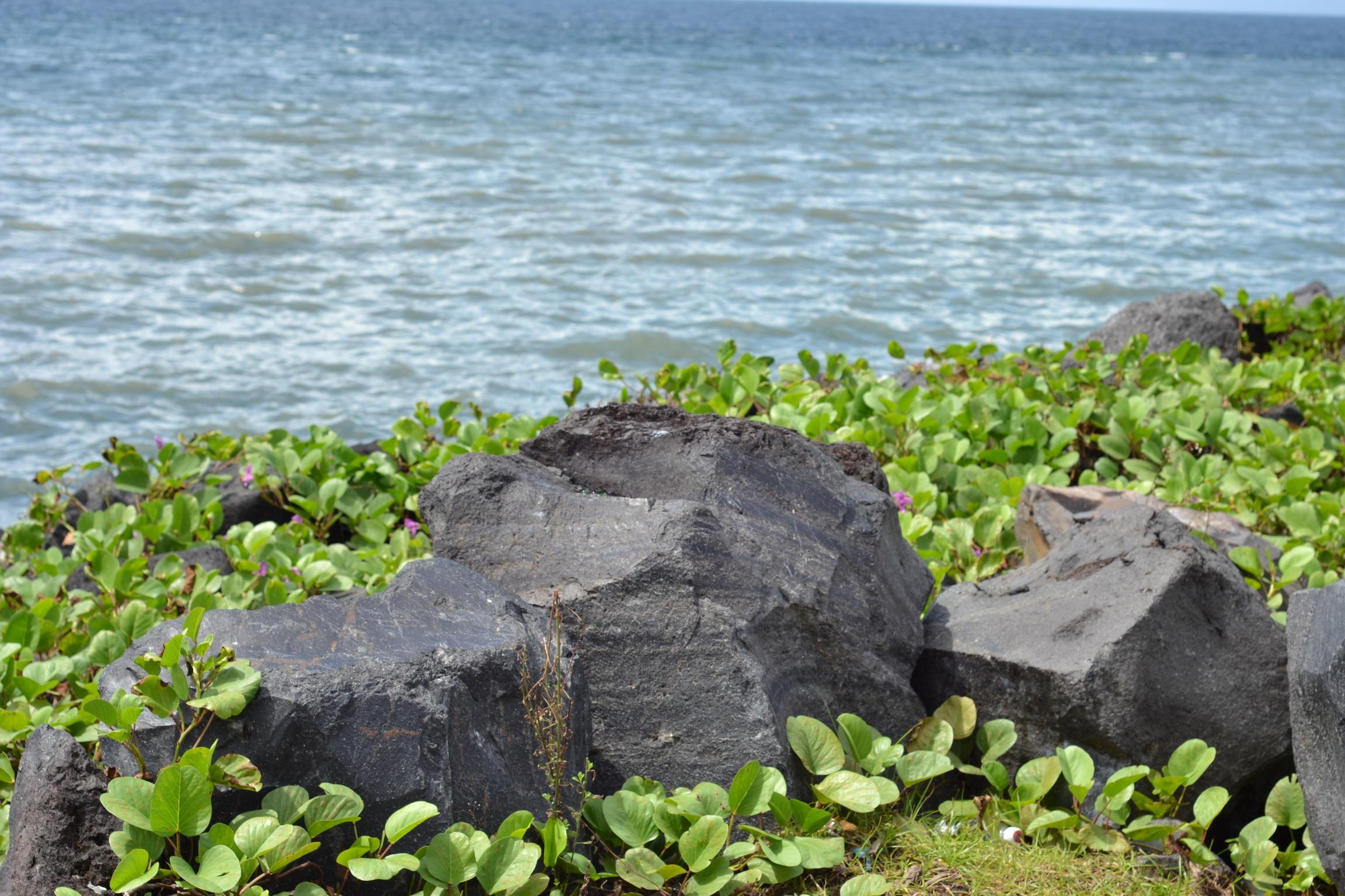 Big stones and plantation photo
