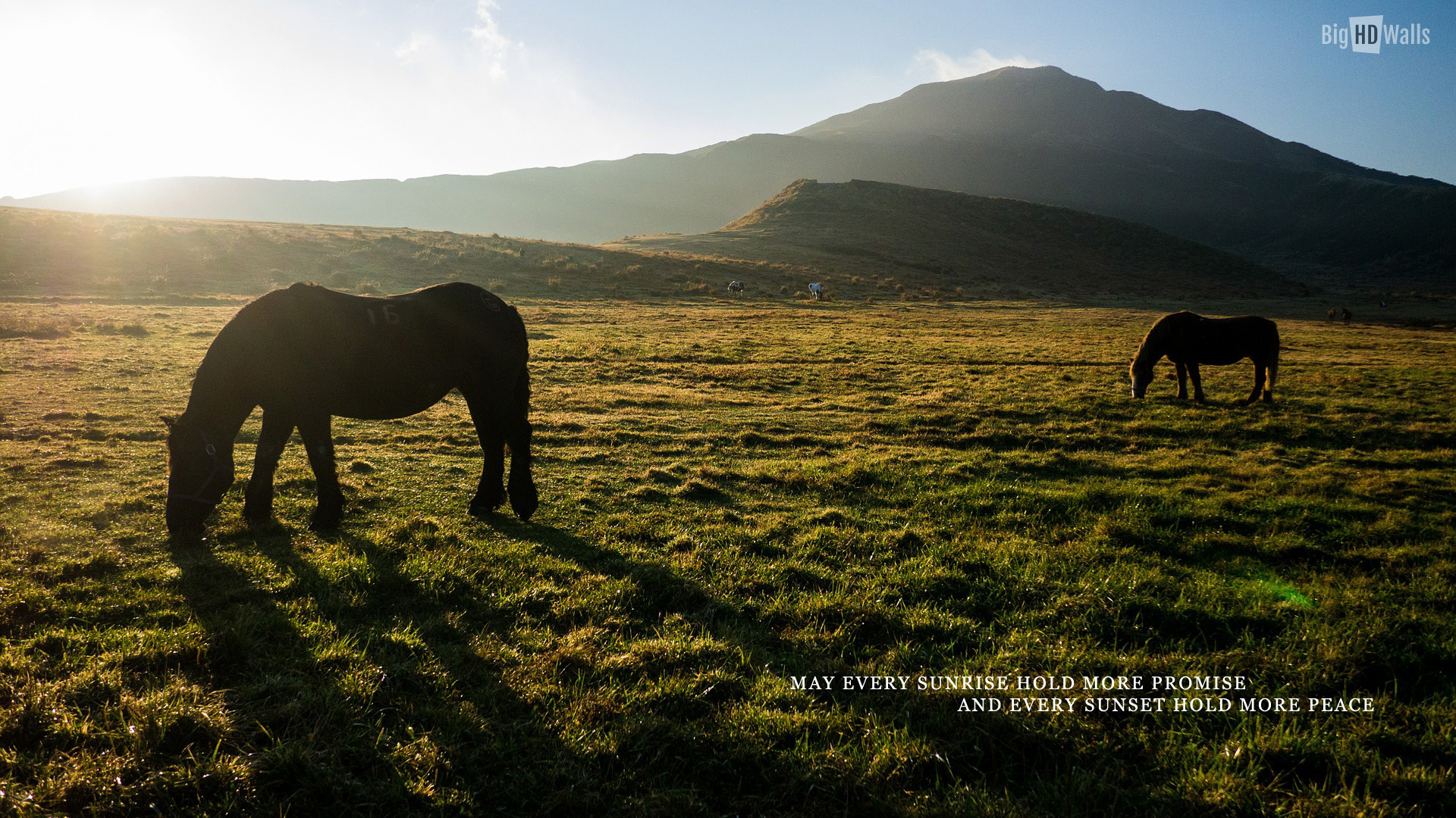 Meadows and horses Wallpaper picture | BigHDWalls