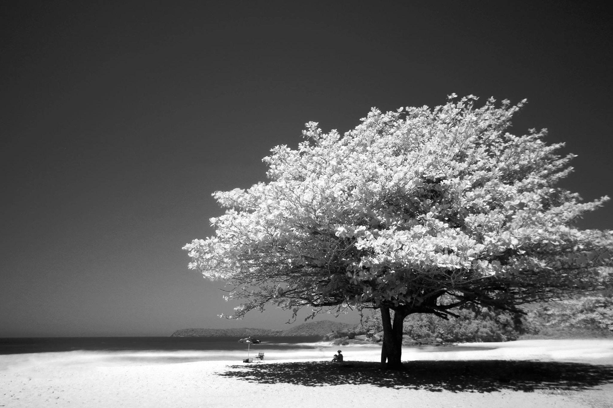 Big Tree Photo, Shade, Scenic, Sand, Shadow, HQ Photo