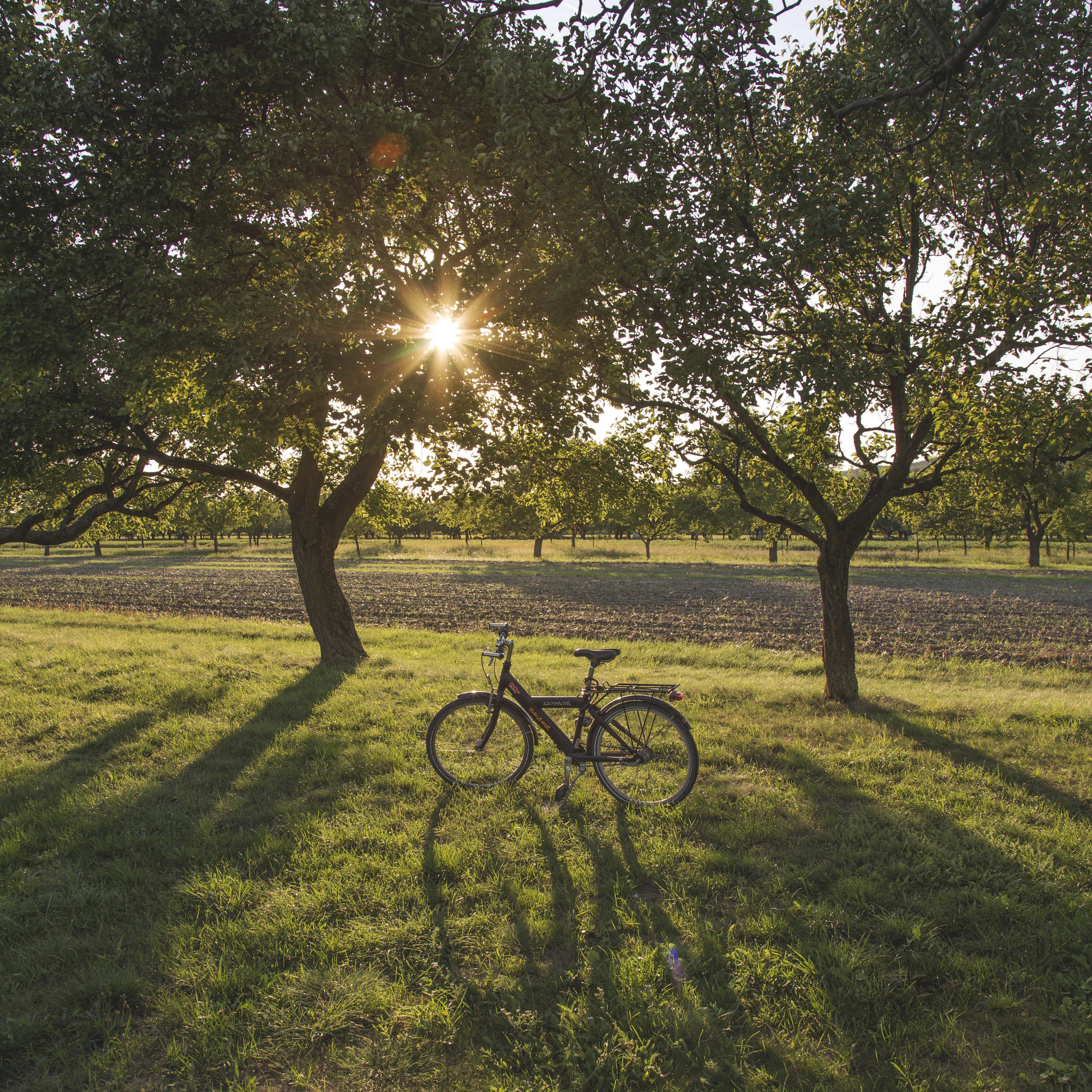 Bike in the Field, Bicycle, Bike, Cycle, Field, HQ Photo