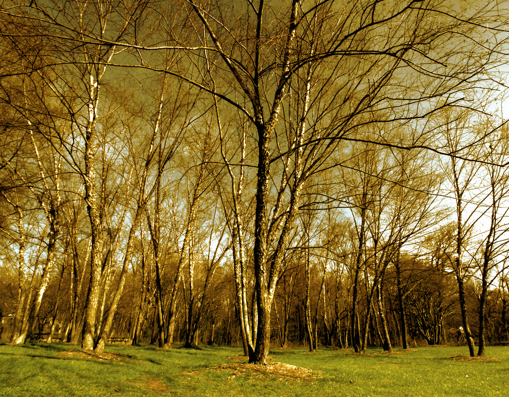 Birch tree forest, Area, Spot, Purity, Row, HQ Photo