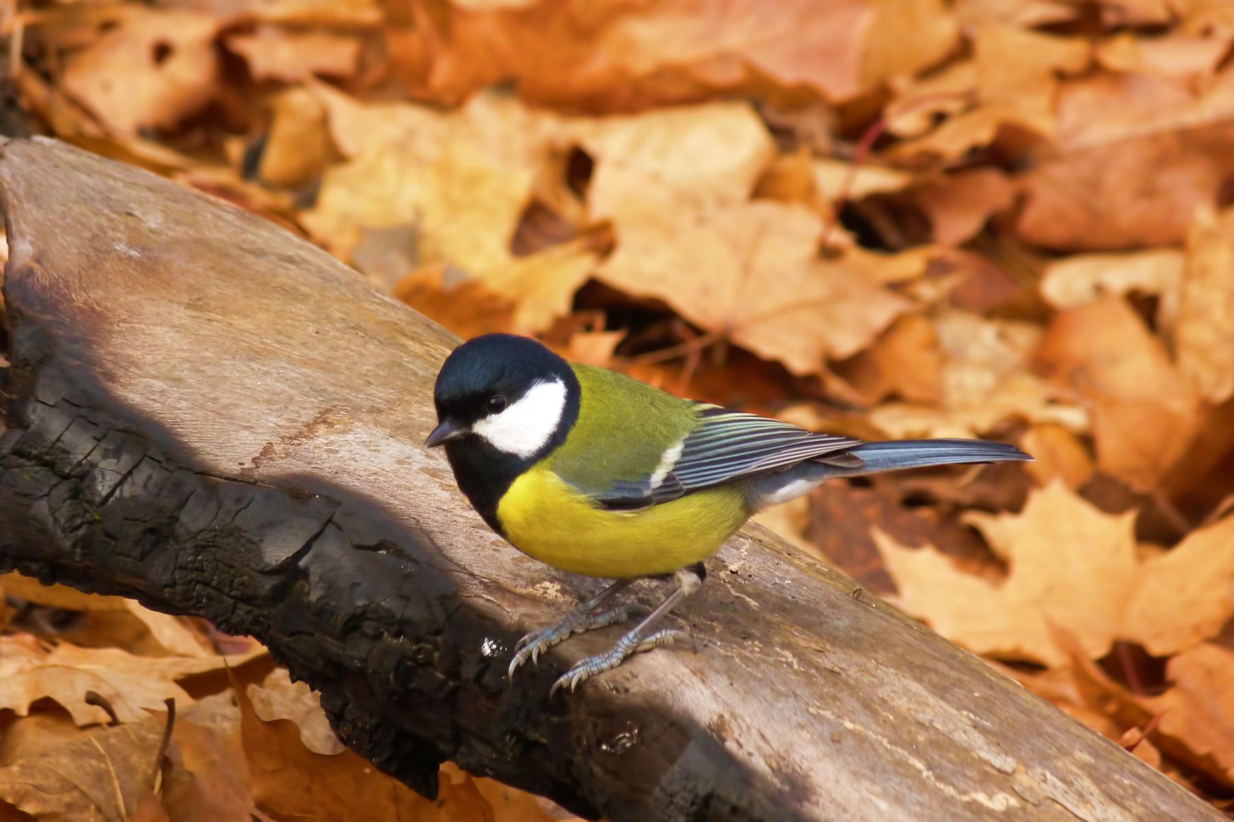 bird, Animal, Autumn, Blurred, Colorful, HQ Photo