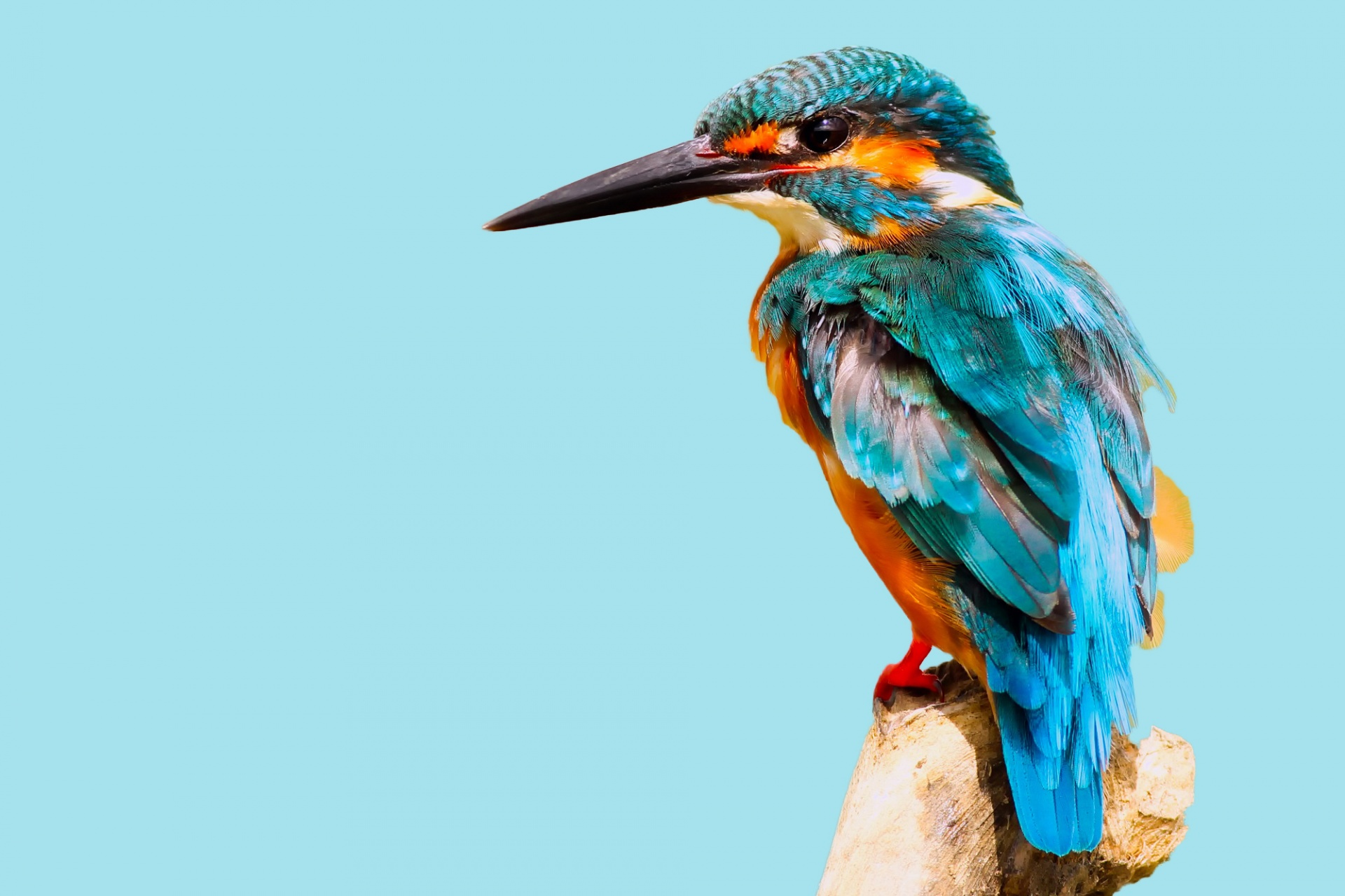 Kingfisher Bird Blue Sky Free Stock Photo - Public Domain Pictures
