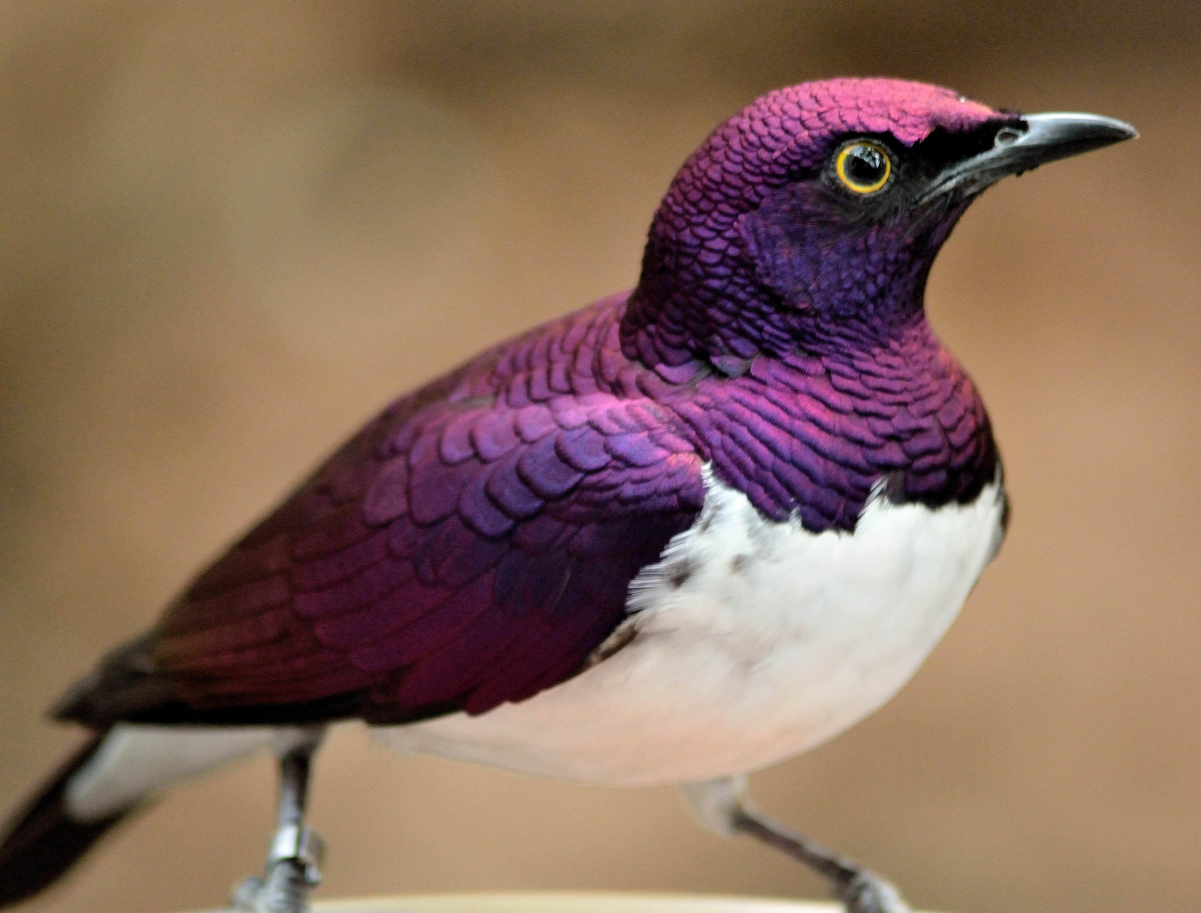 Beauty in birds - Album on Imgur