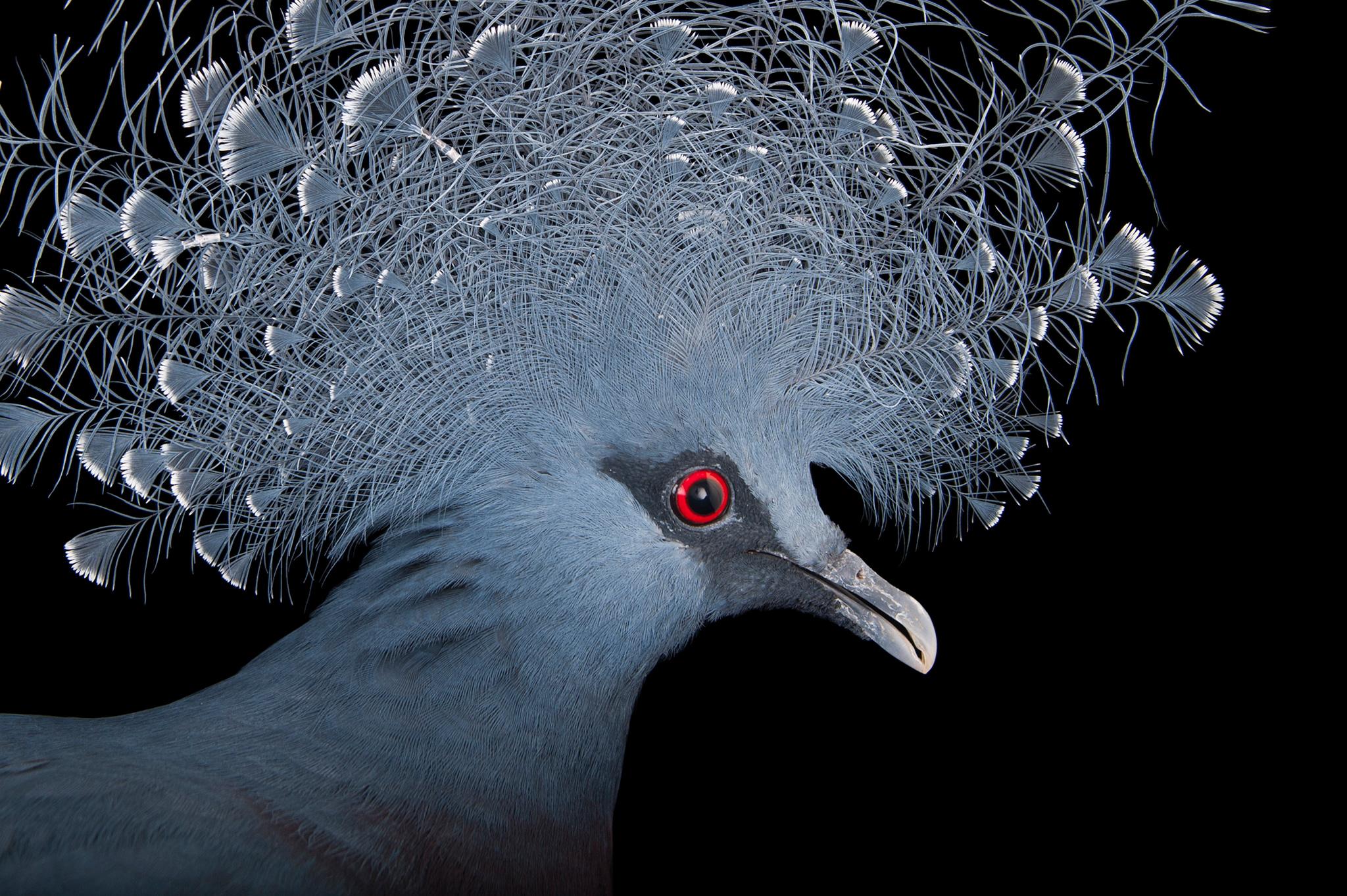birds-hero.jpg