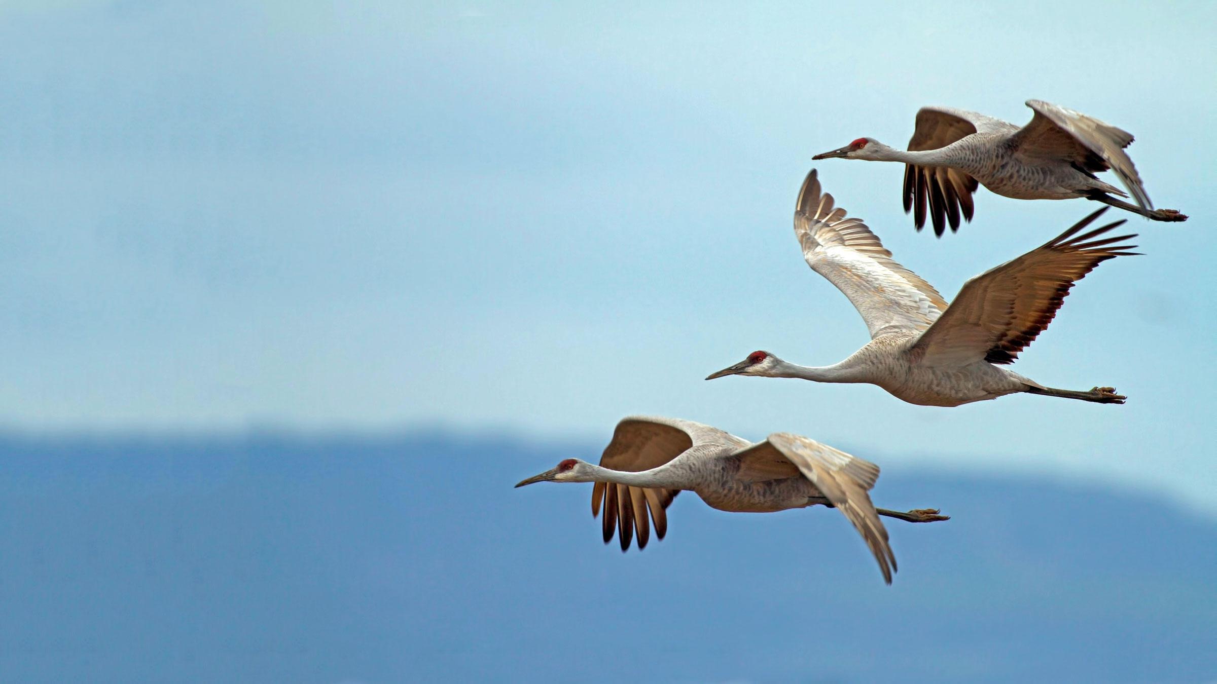 Birds | Audubon