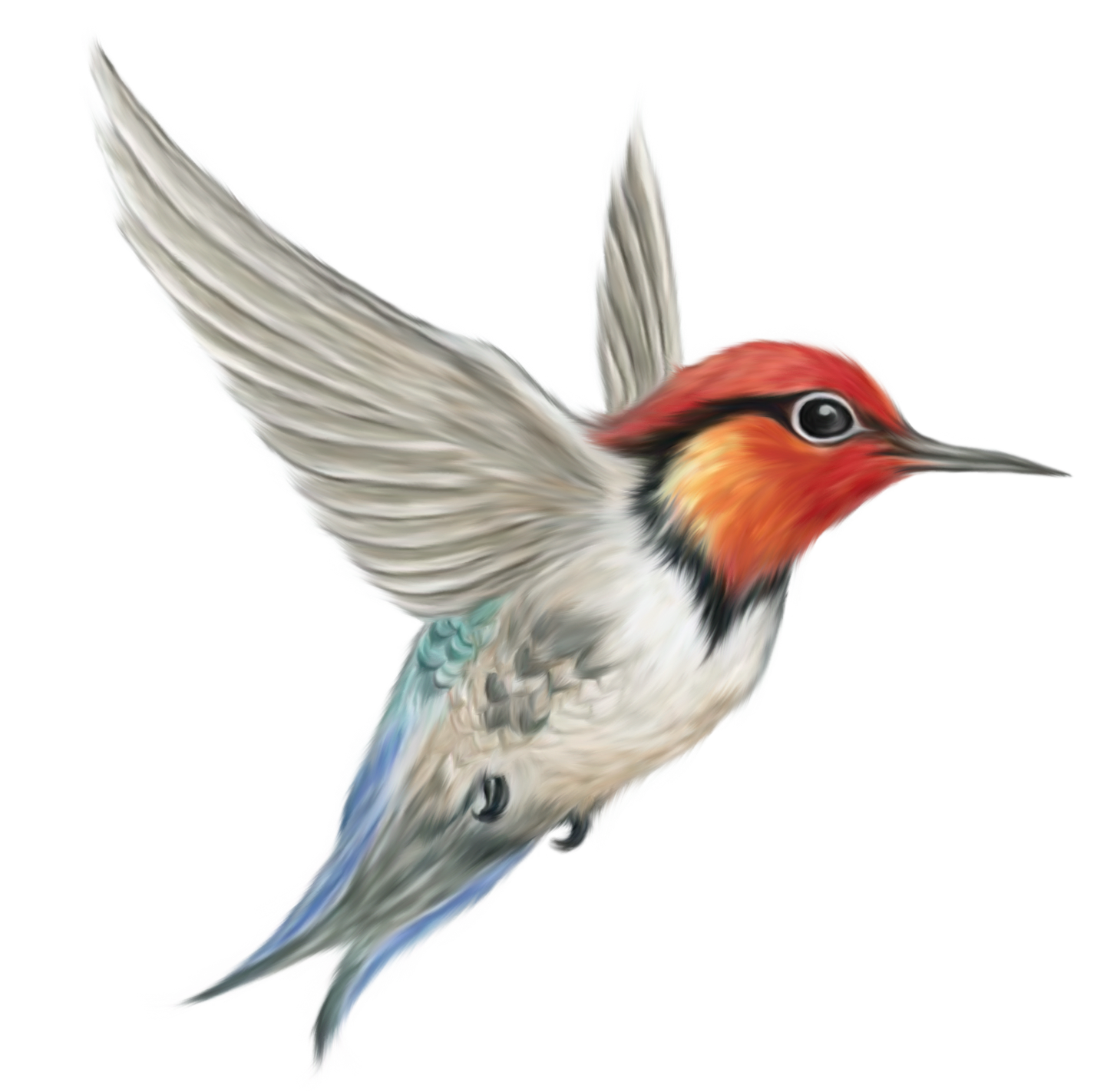 Humming Bird Transparent PNG Clipart Picture | Gallery Yopriceville ...