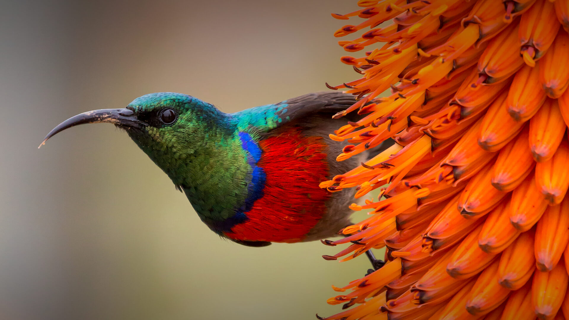 Birds | San Diego Zoo Animals & Plants