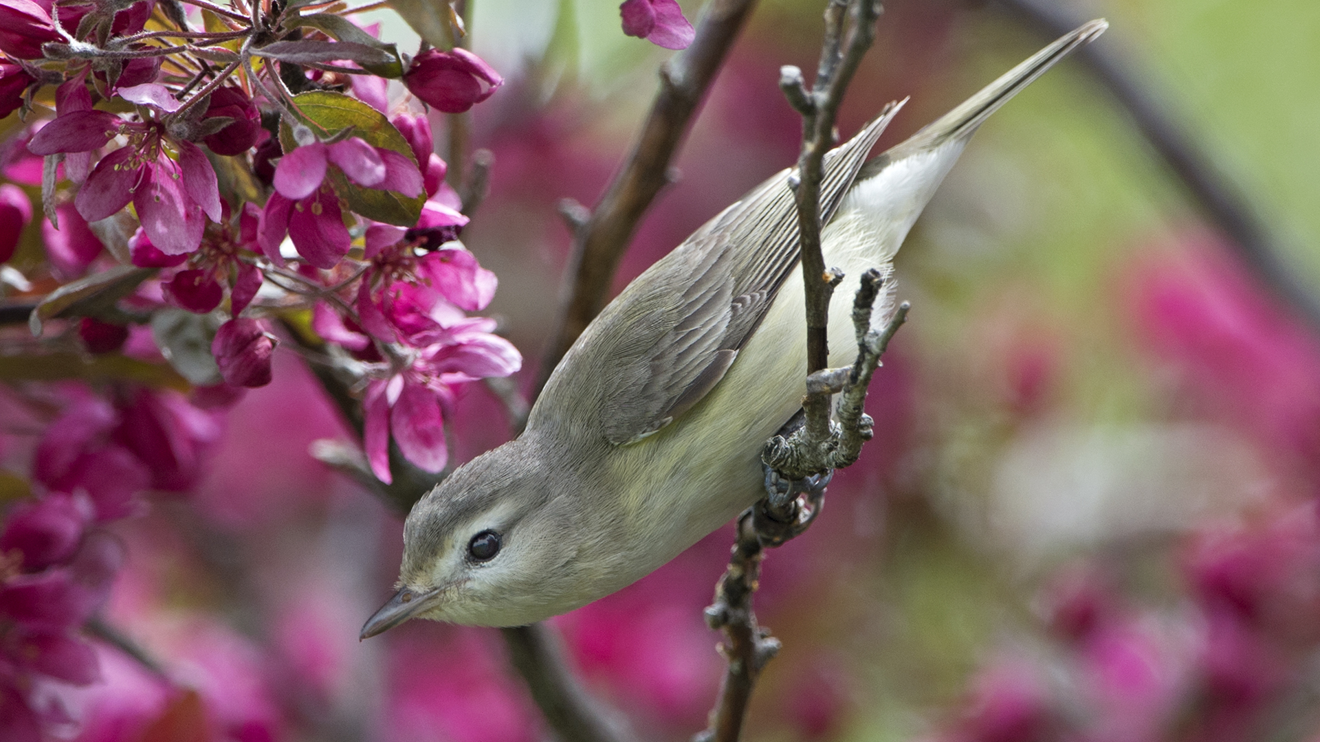 Chicago Bird Sanctuary is Best Place in State to See Spring ...