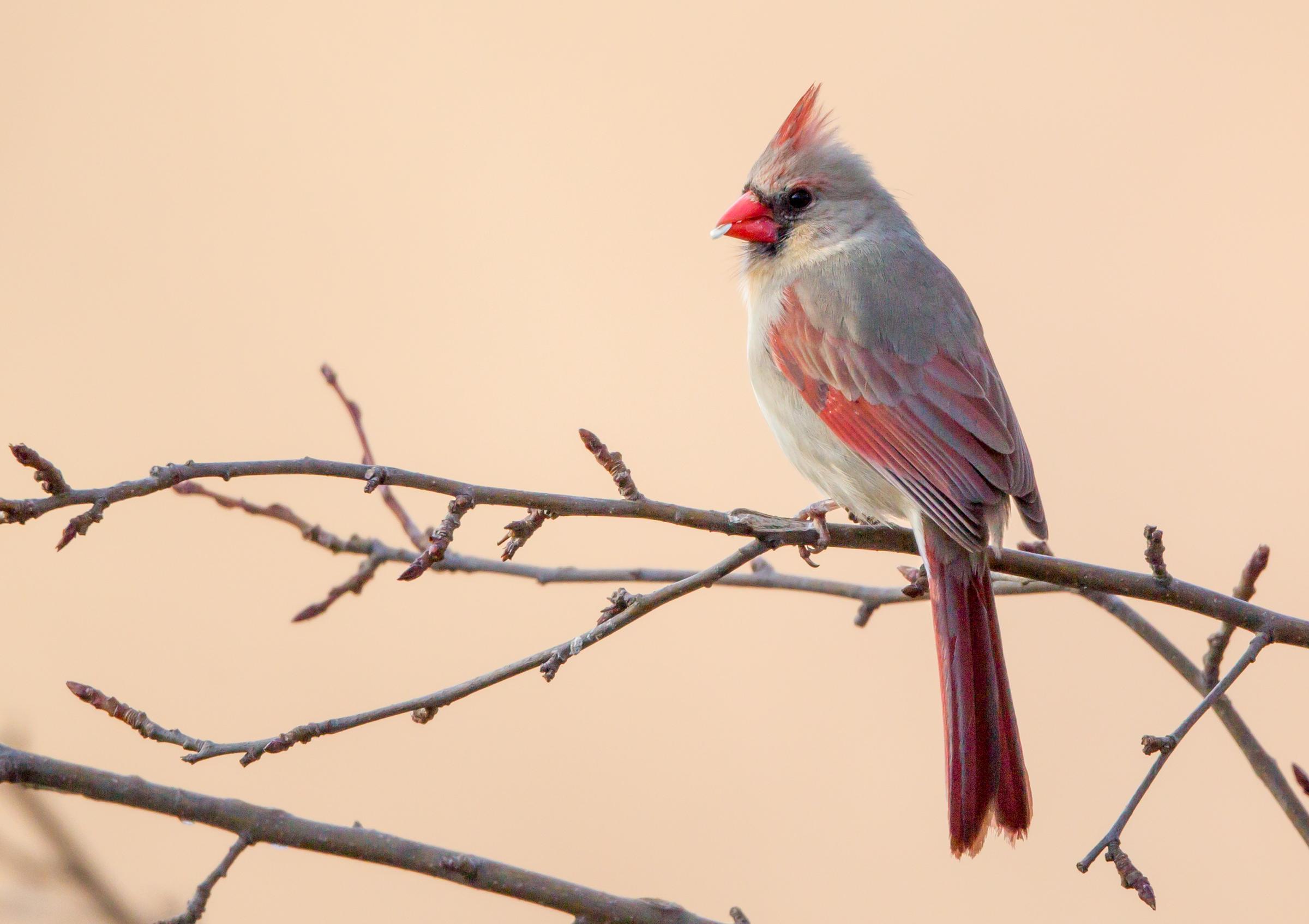 Birds | Audubon Minnesota