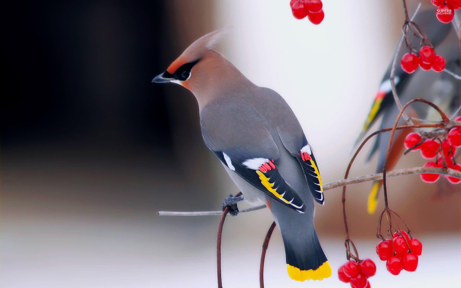 wonderful bird - Imgur