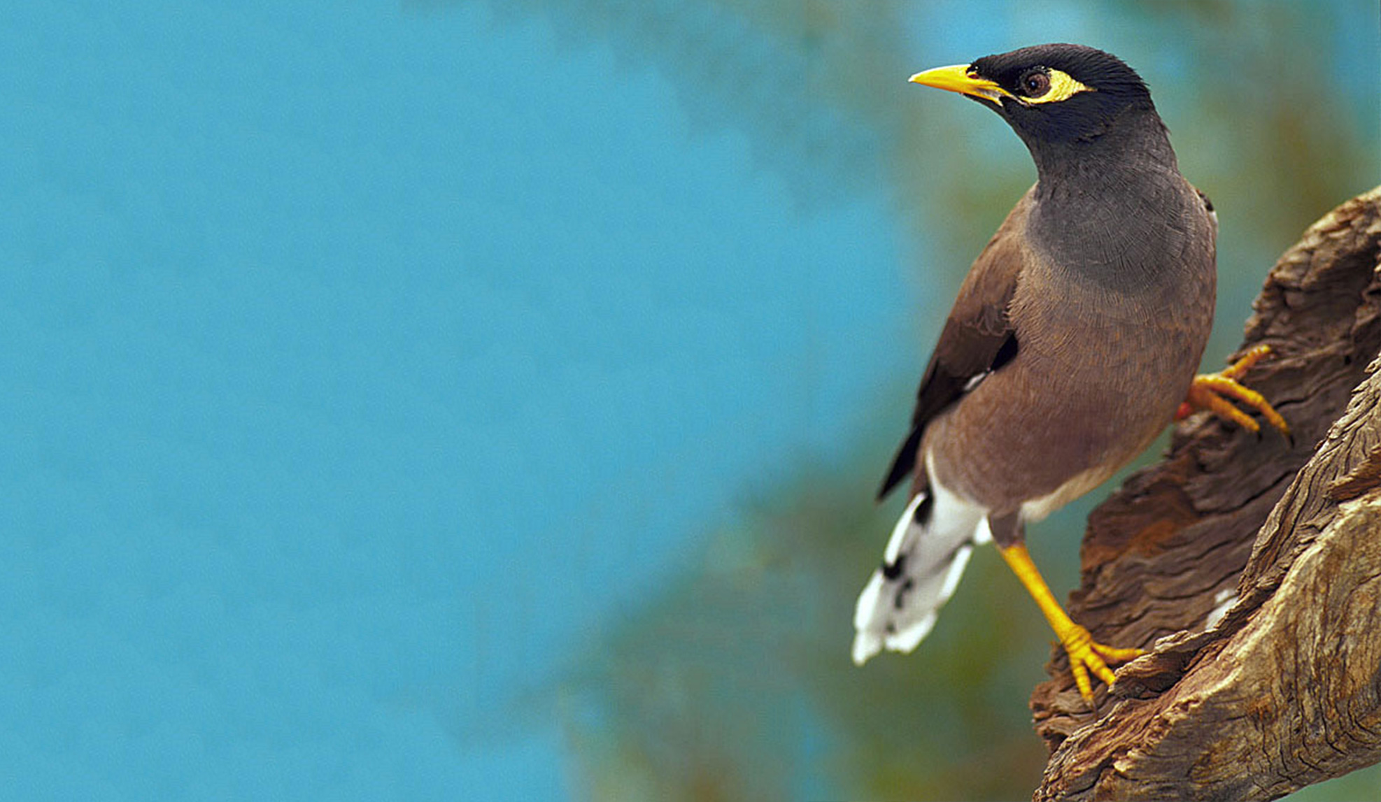 Pest Bird Control - Pest Animal Management Qld