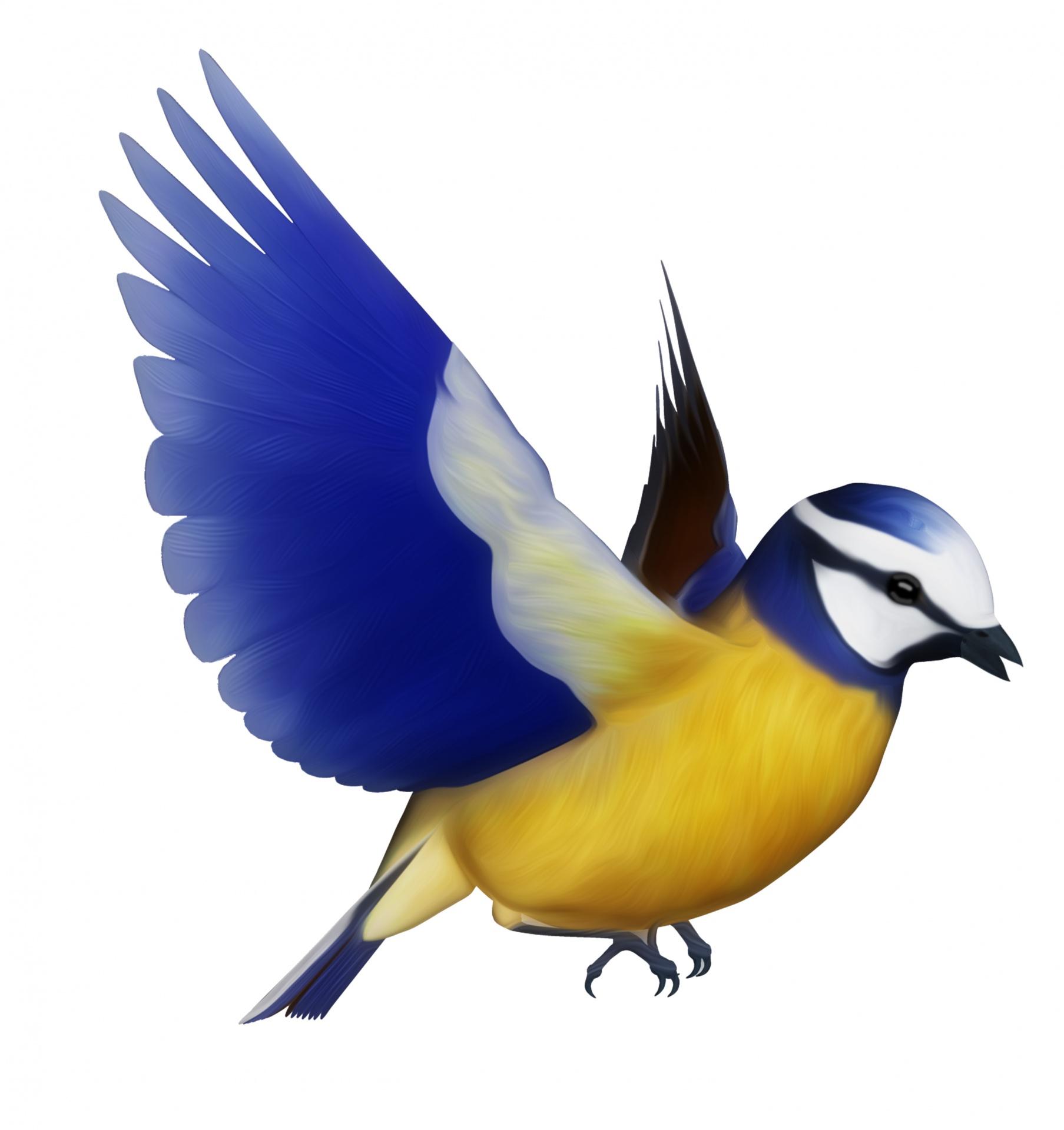 Blue Tit Bird Clipart Free Stock Photo - Public Domain Pictures