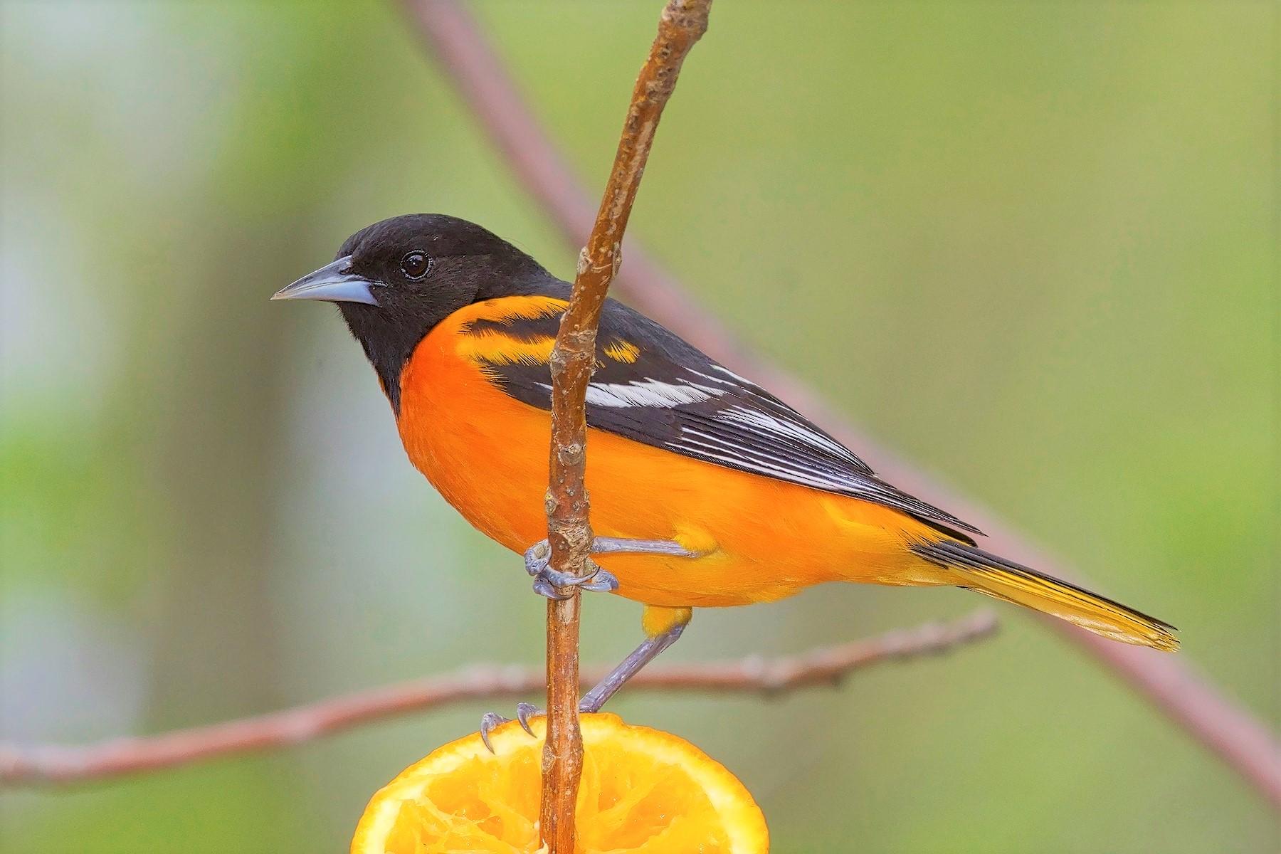 Bird Walk | Cantigny