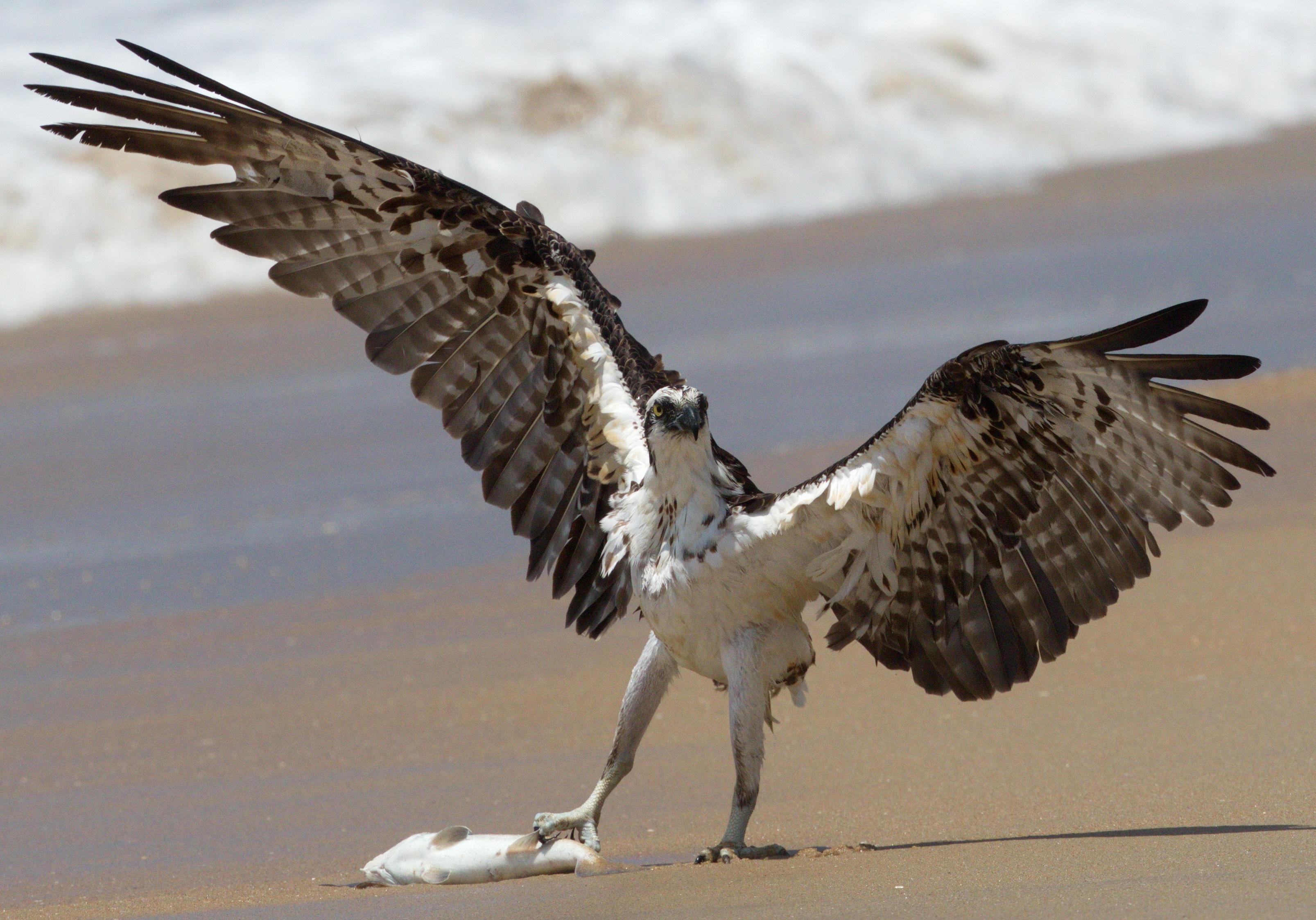 San Diego Bird Spot | Birding in San Diego County