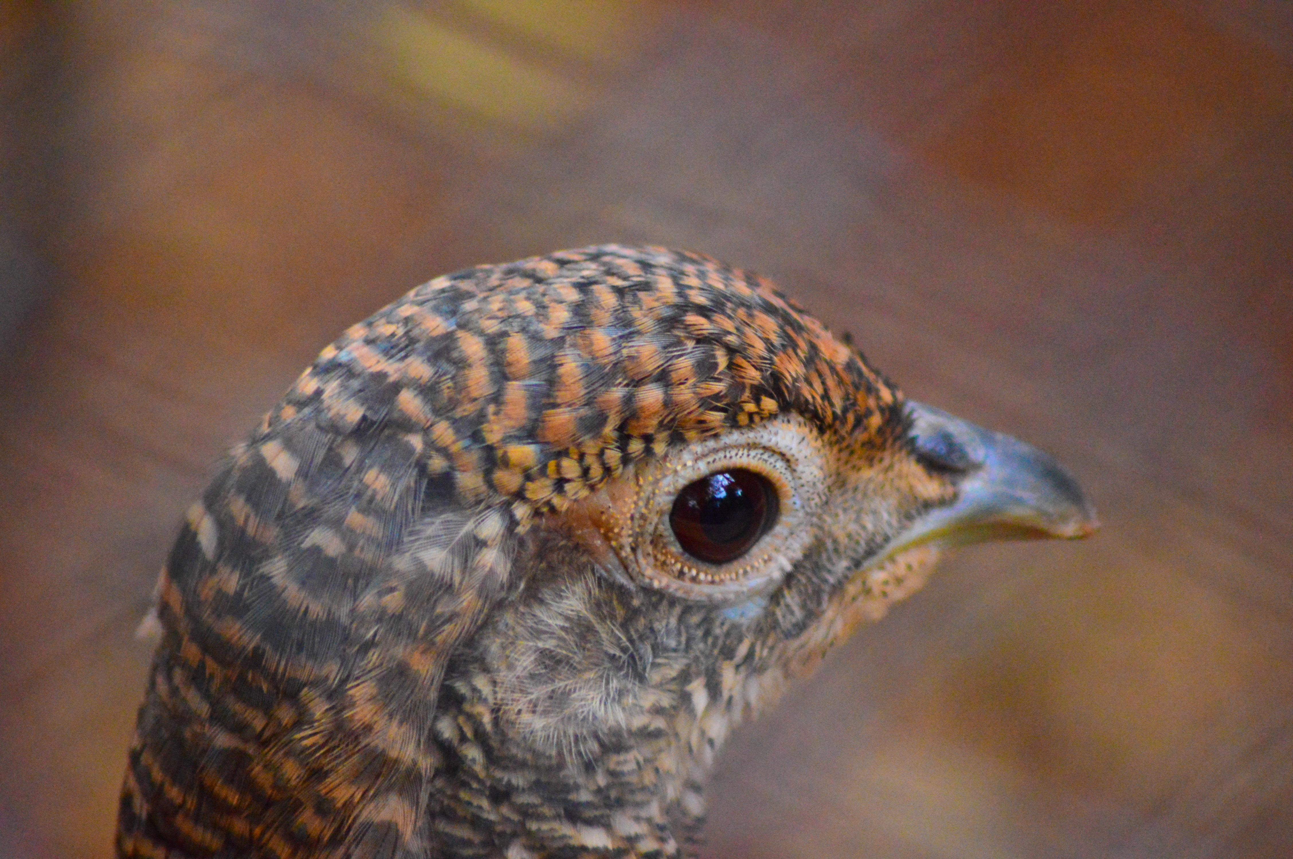 Bird, Animals, Beautiful, Colors, Head, HQ Photo
