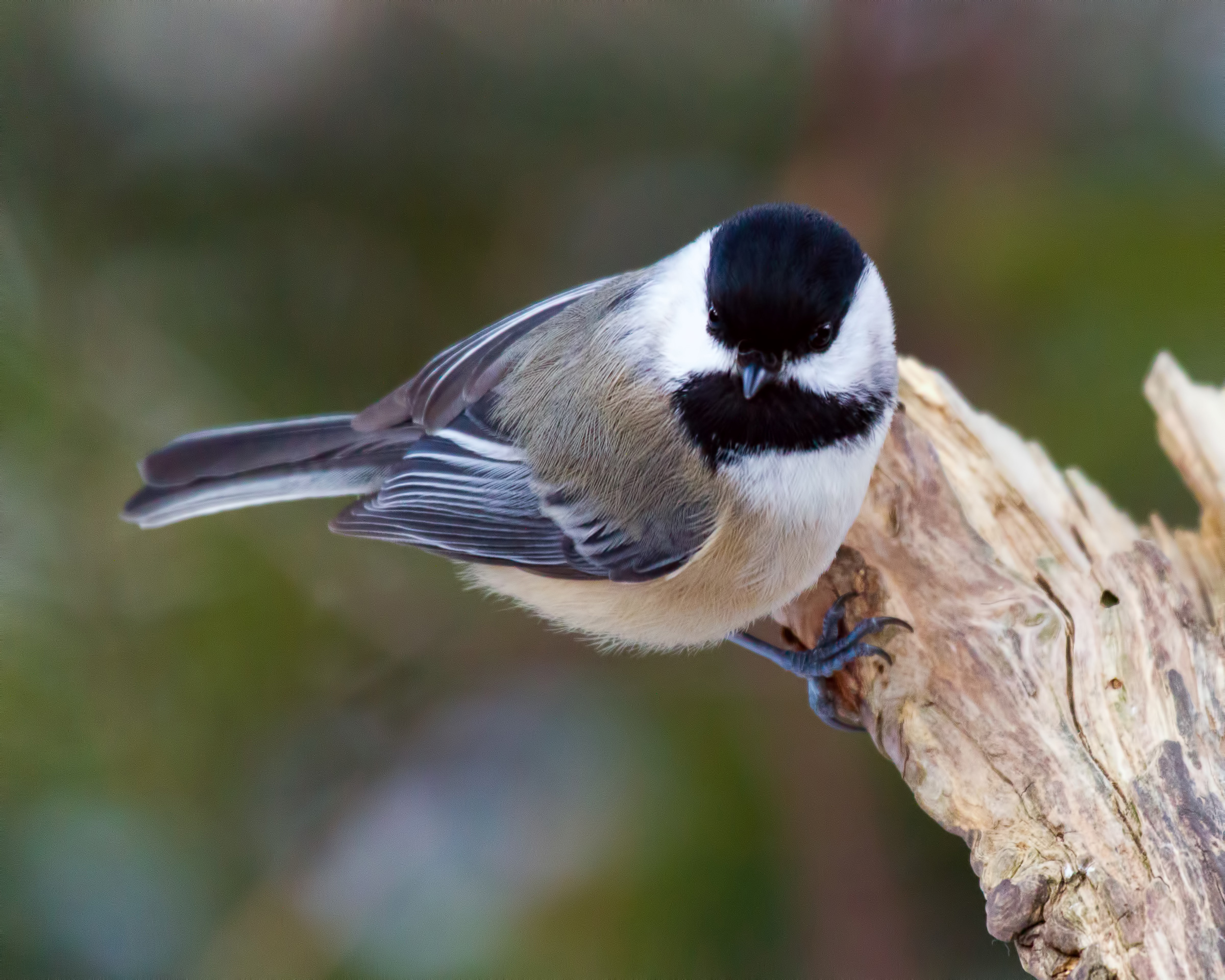 Bird, America, Ornithology, Wildlife, Wilderness, HQ Photo