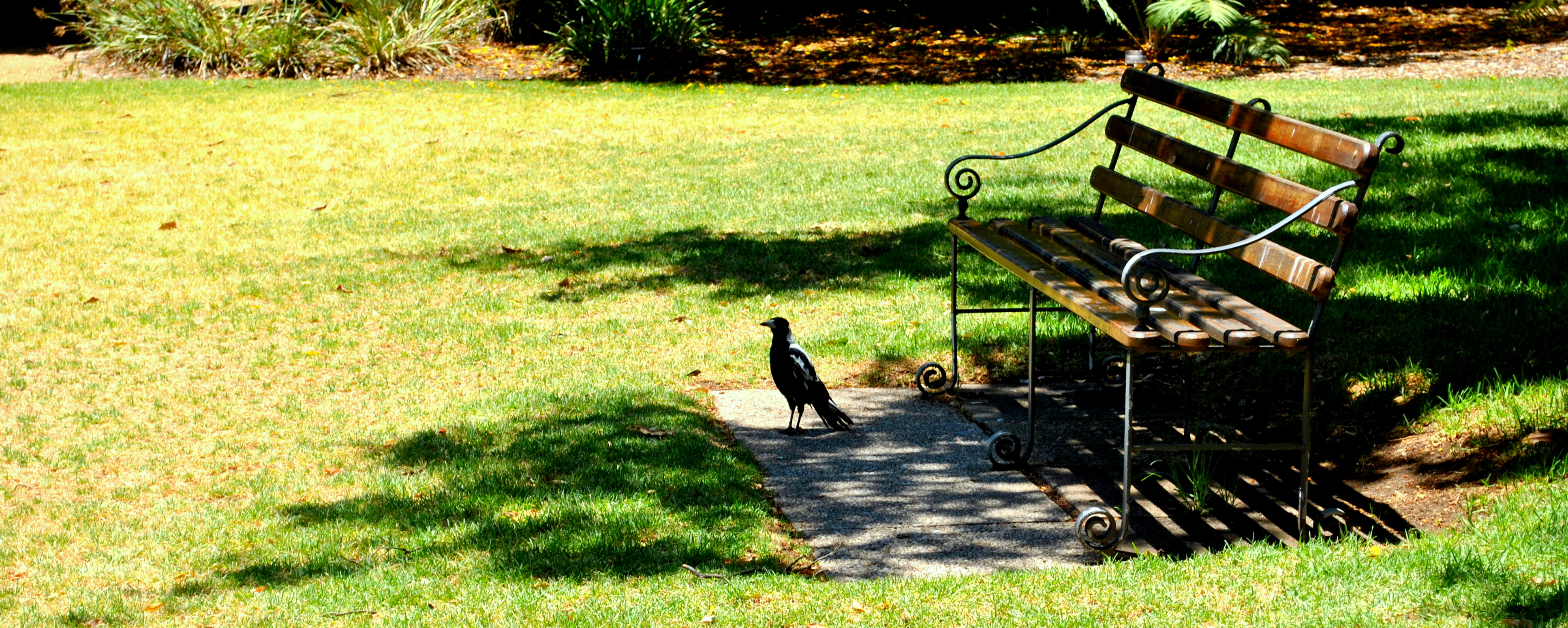 Bird and the Bench, Animal, Bench, Bird, Crow, HQ Photo