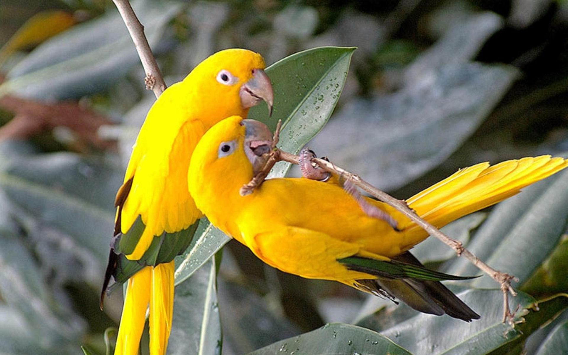 Free photo: Bird Couple - Animal, Bird, Couple - Free ...