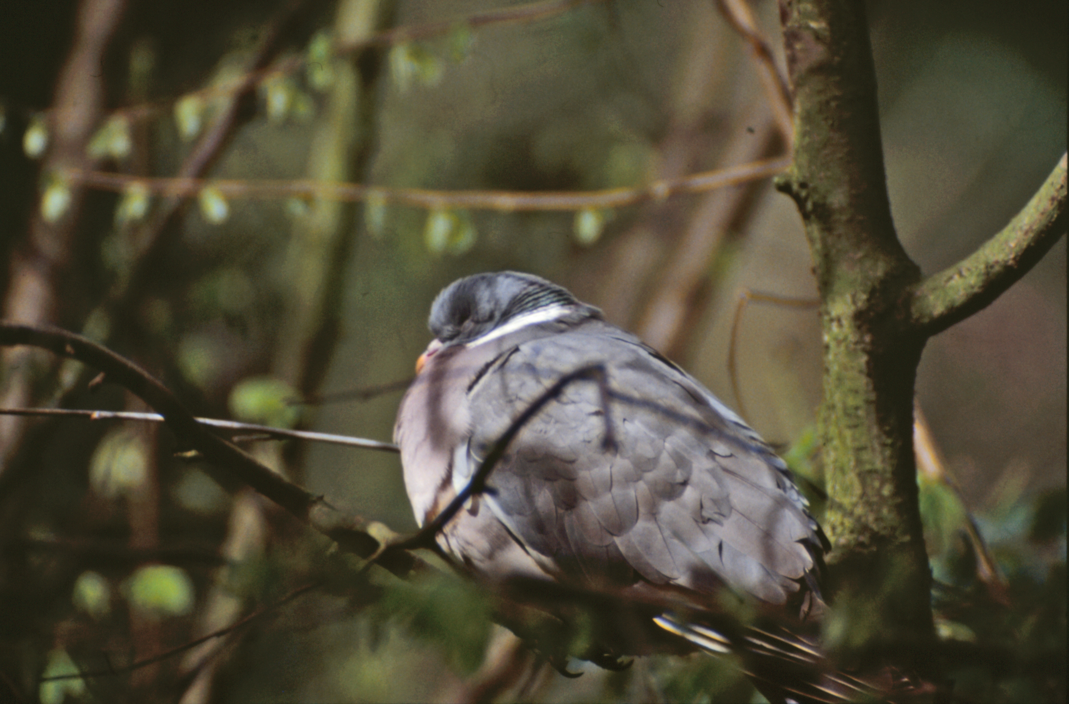 Bird in tree, Animal, Bird, Branches, Feathers, HQ Photo